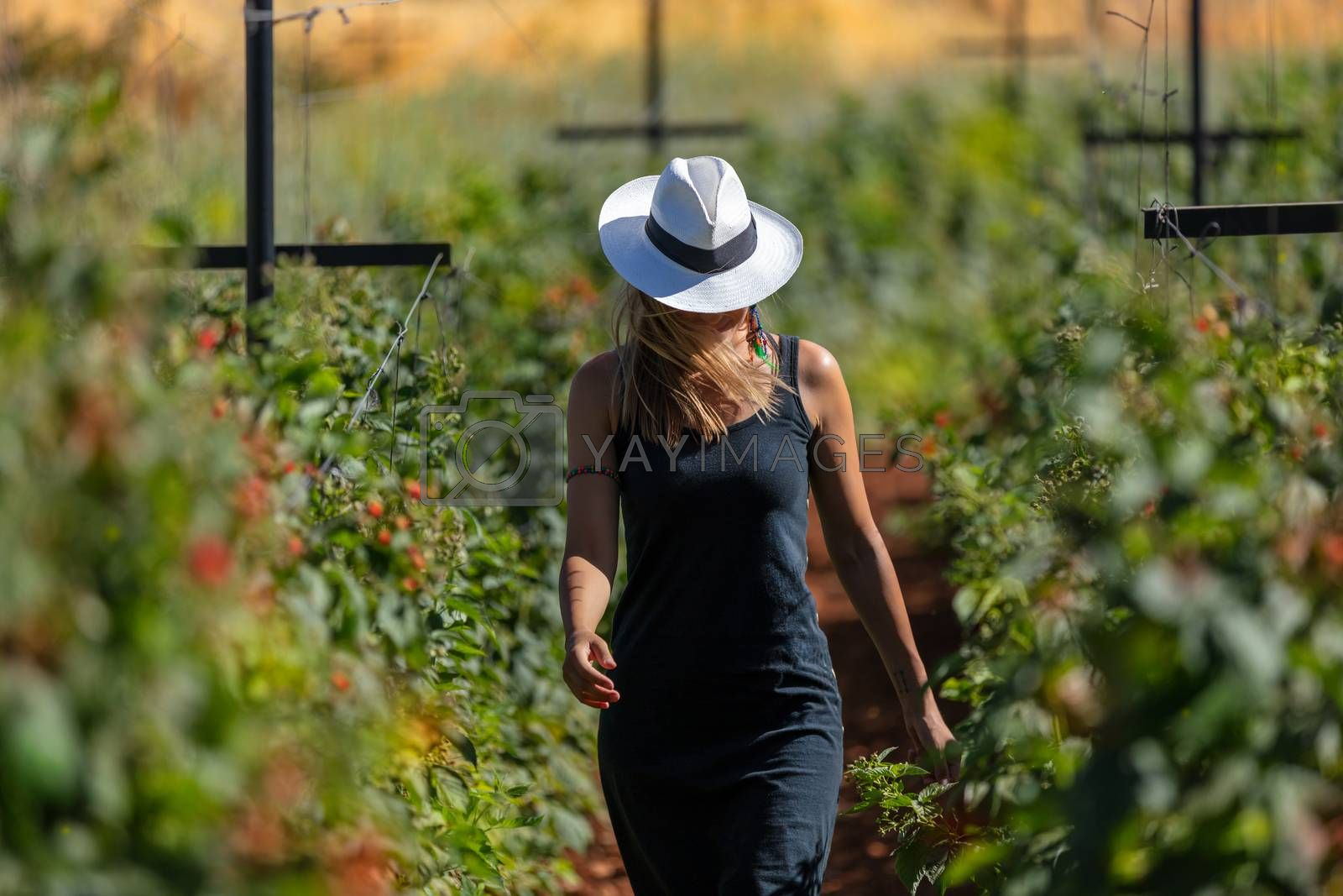 Young Stylish Girl Walking in the Ranch. Working in the Garden. Cultivation of Fruits and Vegetables. Harvest Season Concept.
