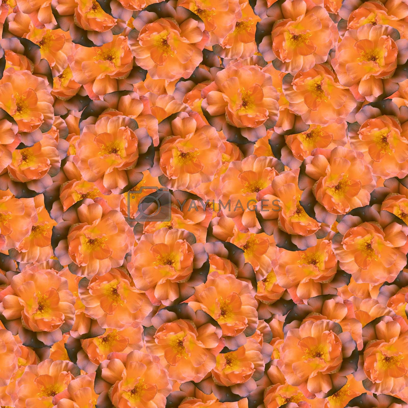 texture of a seamless flower pattern. delicate roses. decorative design elements by kamrad71