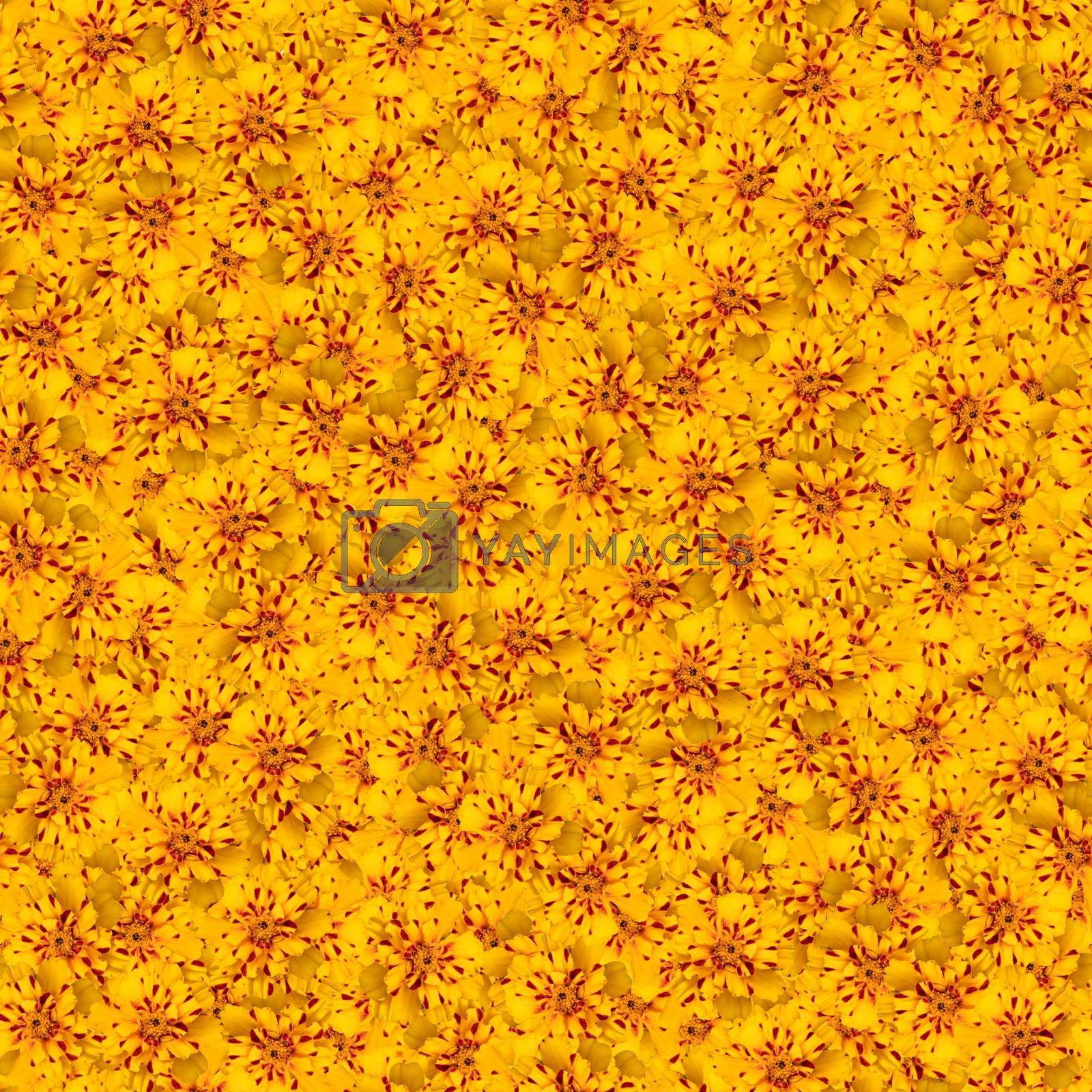 texture of a seamless flower pattern. bright marigolds. decorative design elements by kamrad71