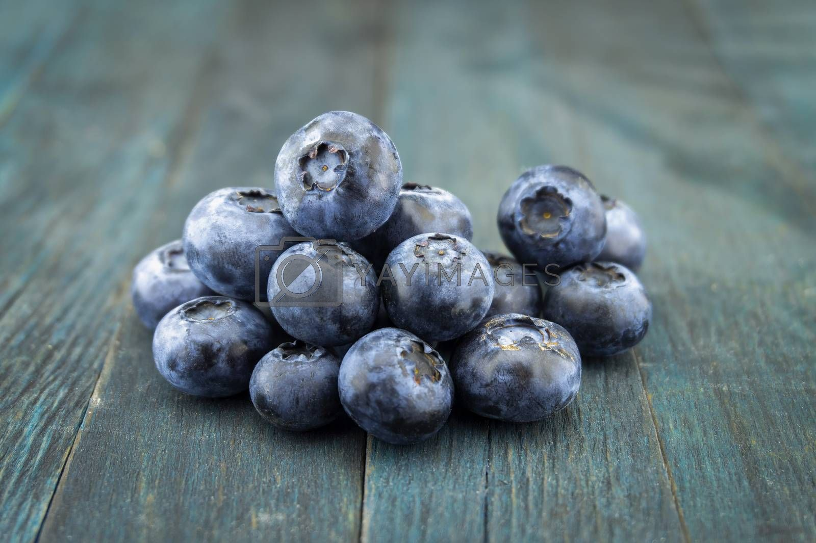Bunch of fresh blueberries on blue rustic board, low angle selective focus and free copy space for text