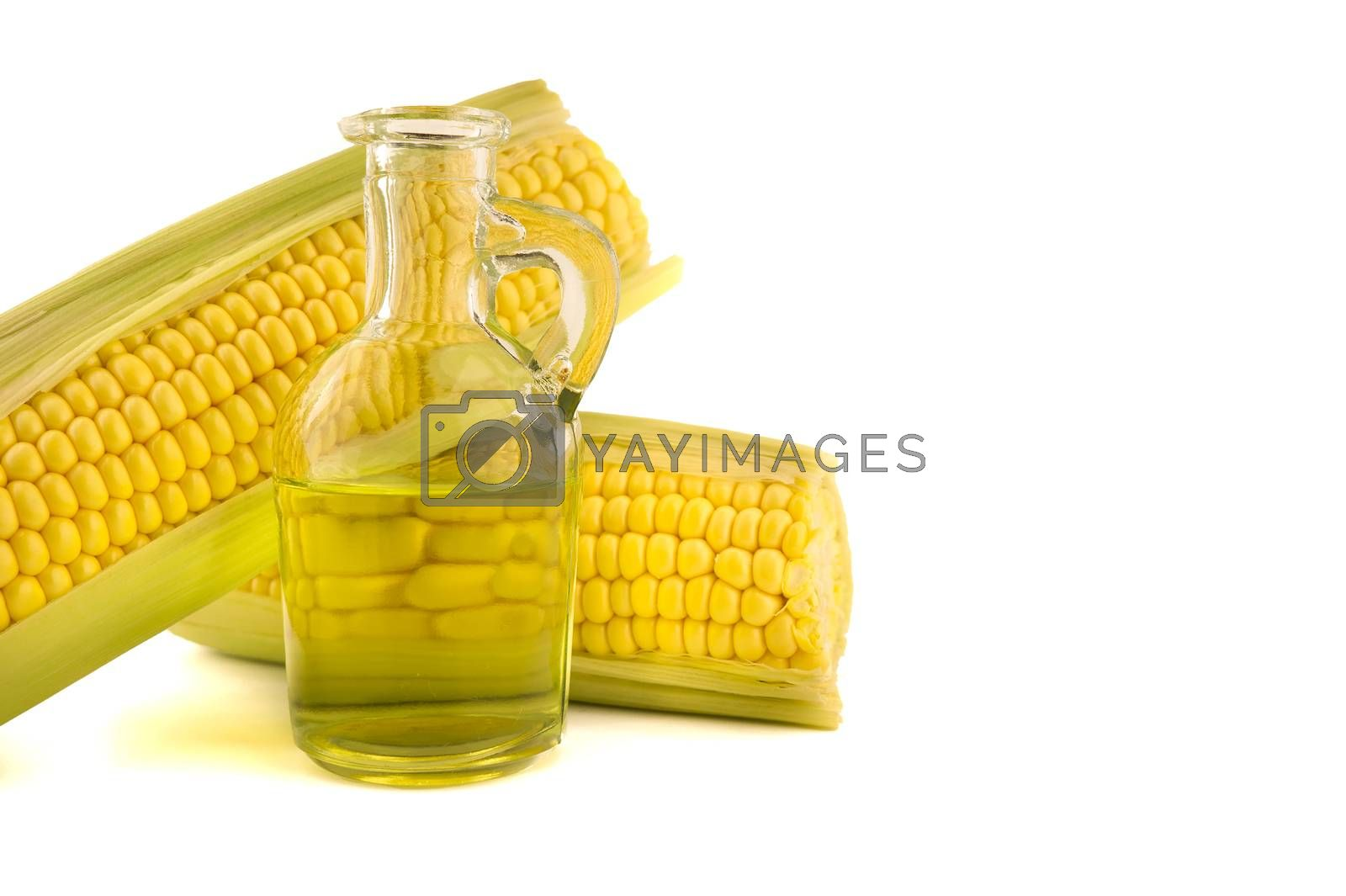 Corn oil in decanter and fresh corncobs isolated on white background with free copy space for text