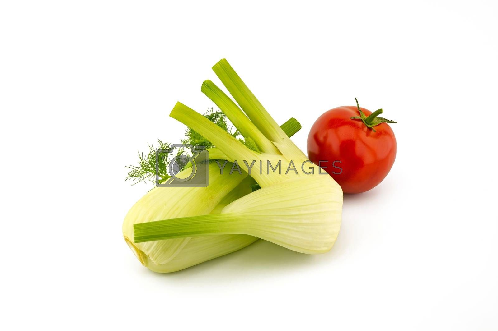 Fresh ripe red tomato and fennel over white background