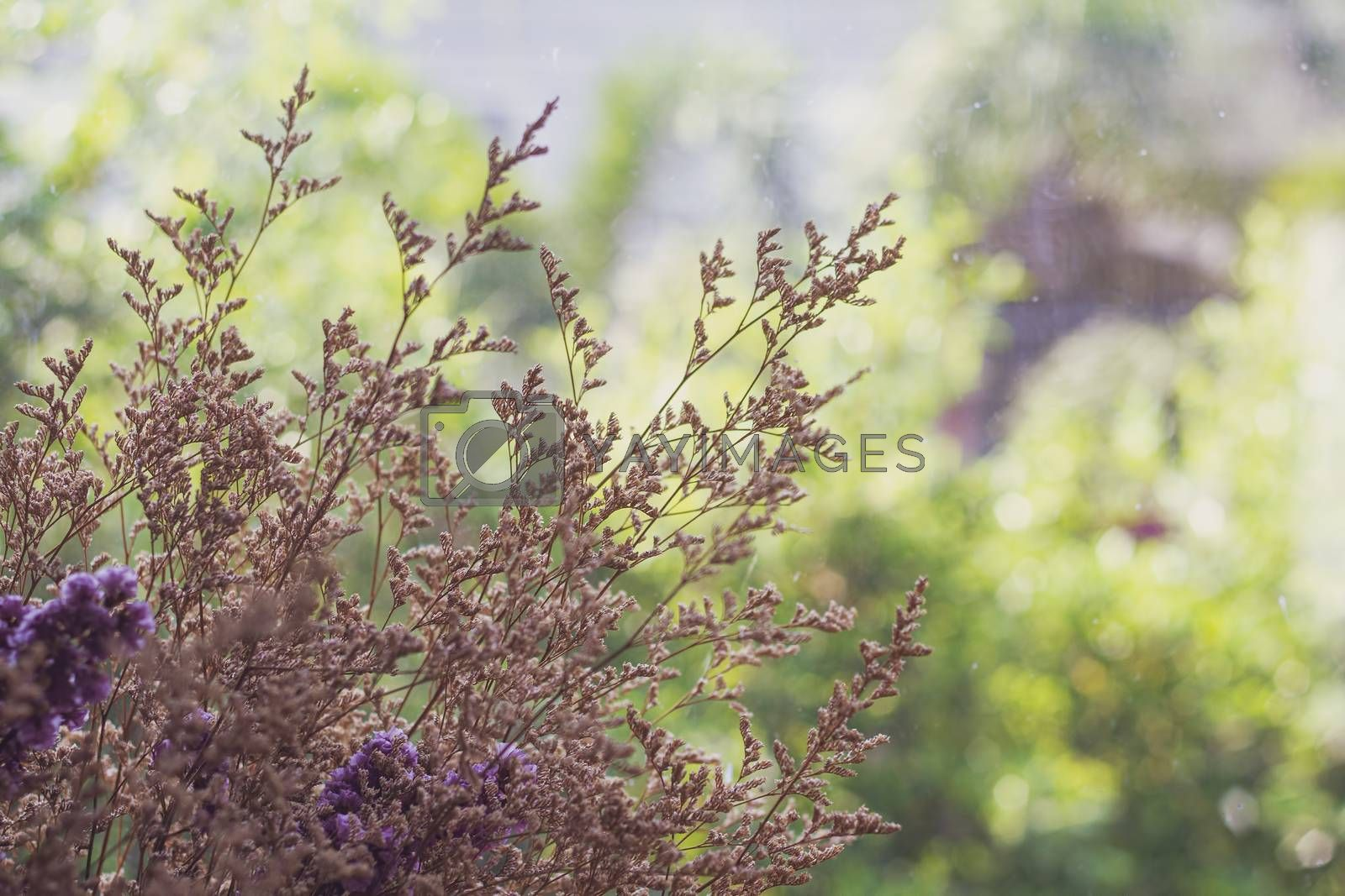 Bouquet of dried flowers with green nature background