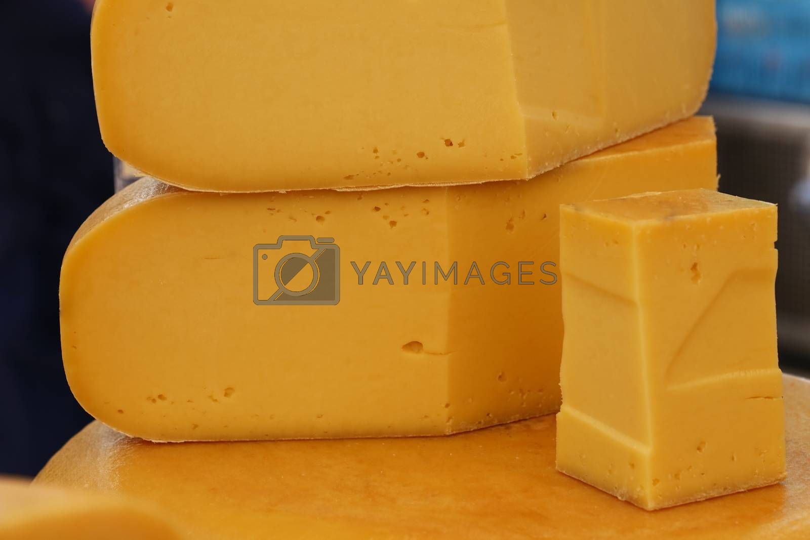 Close up cut slices and wheel of hard young mild yellow gouda Dutch cheese, low angle view
