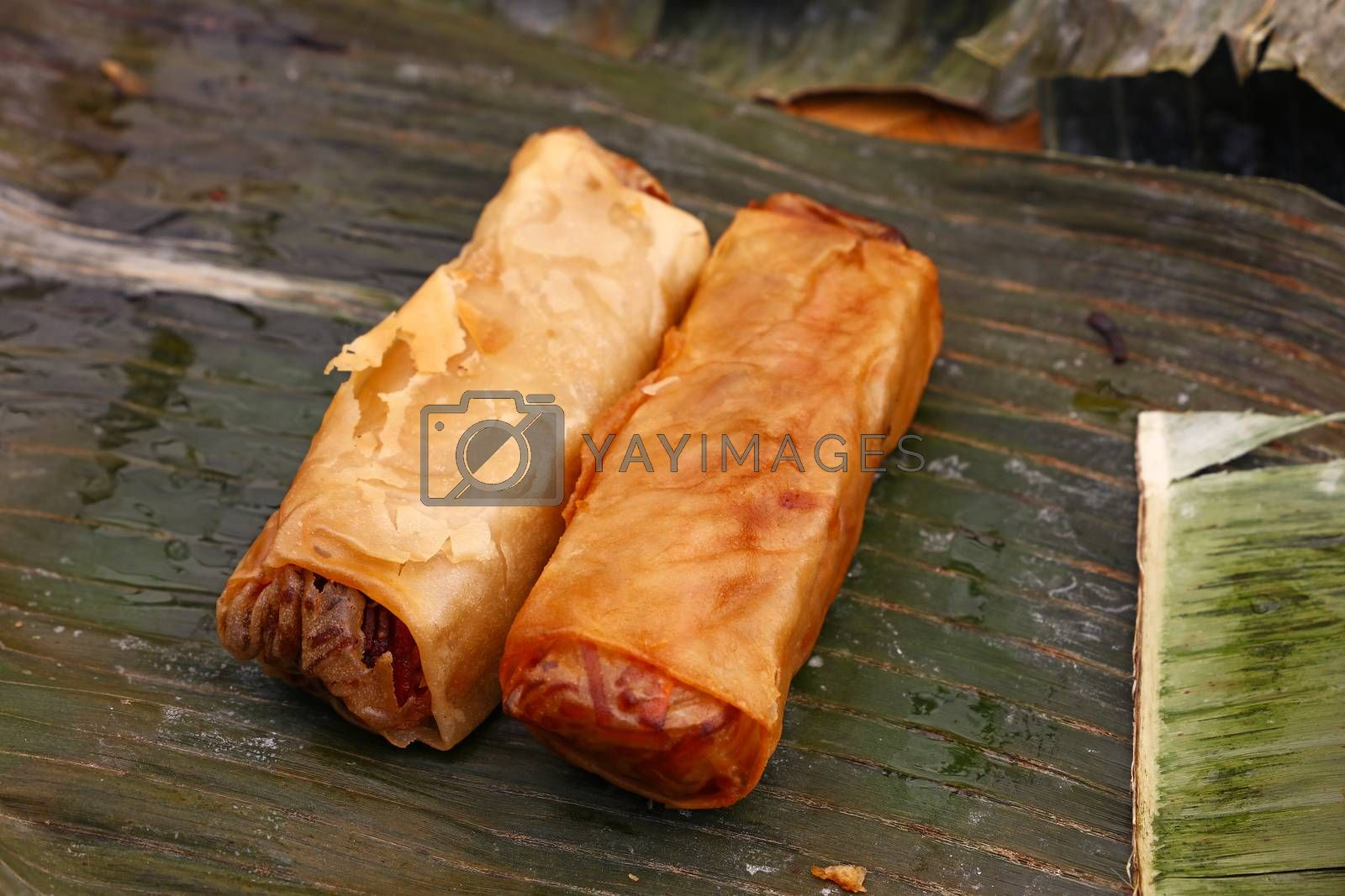Portion of two deep fried crispy spring rolls, traditional Asian cuisine appetizer snack, served on green banana leaves, high angle view