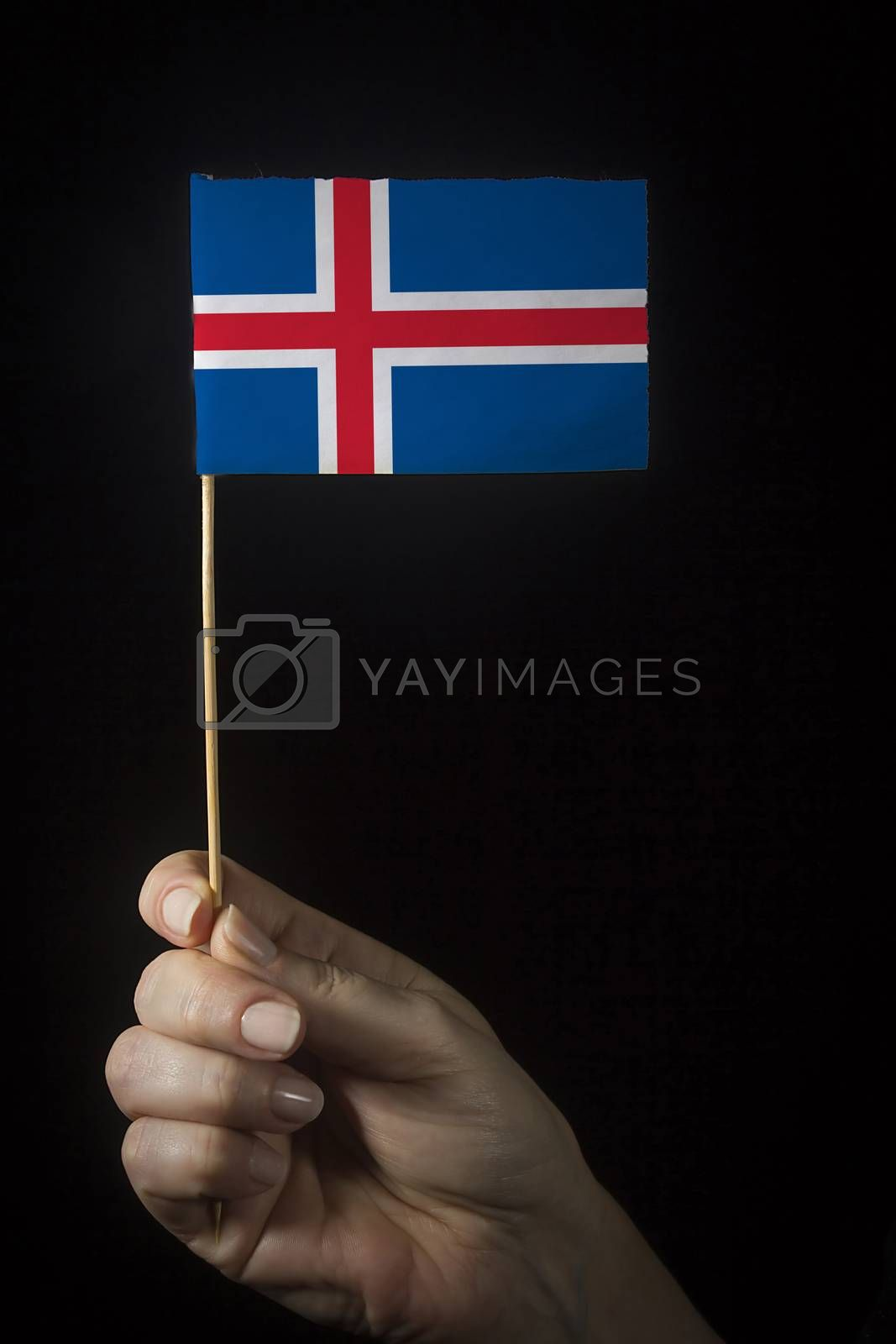 Hand with small flag of state of Iceland