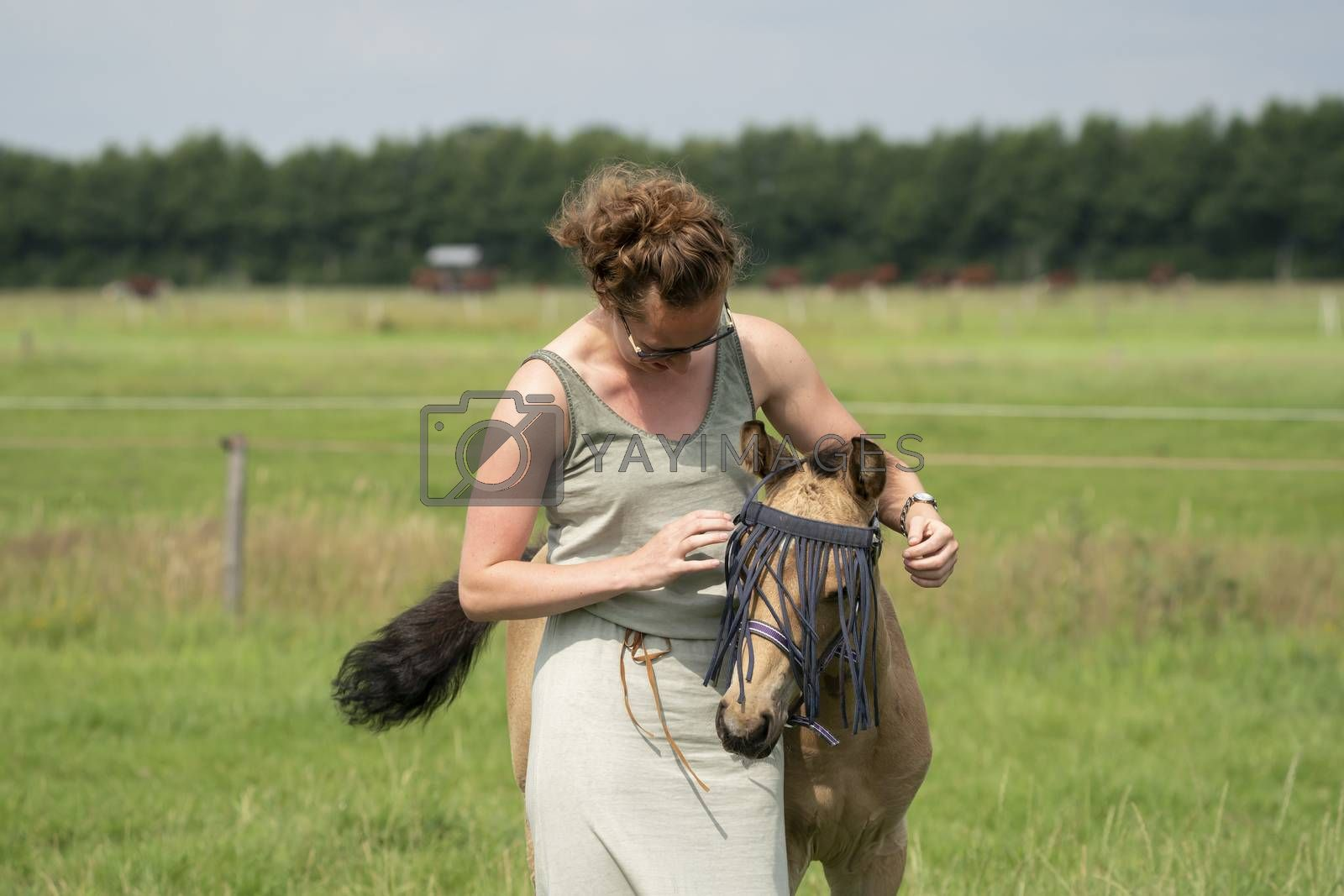 A falcon color foal in the field, wearing a fly mask, young woman takes off the fly mask by DasyaDasya