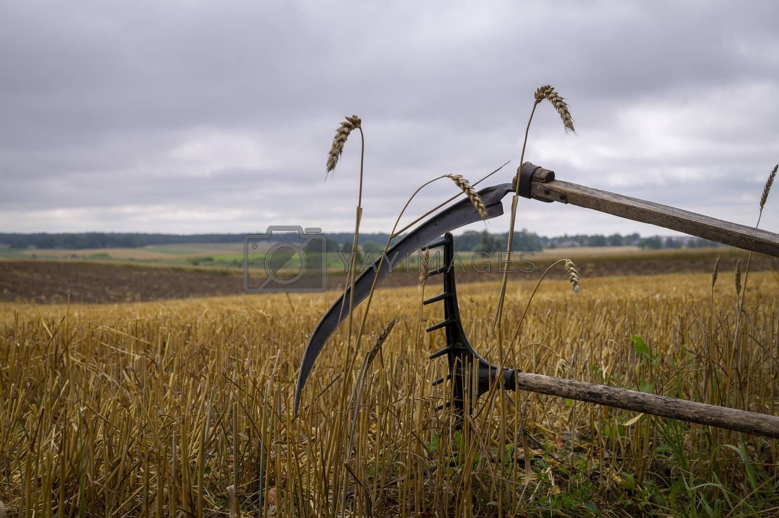 Rustic scythe and rake in a harvested field of wheat with stalk stubble in an agricultural landscape