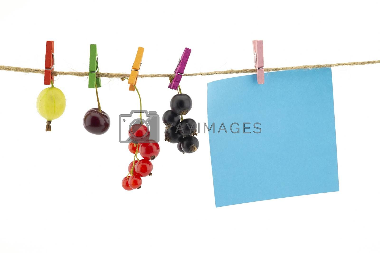 Fresh fruit hanging from clothes pegs on a rope with a gooseberry, red currants, cherry and black currants isolated on white with copy pace on blank sticky note