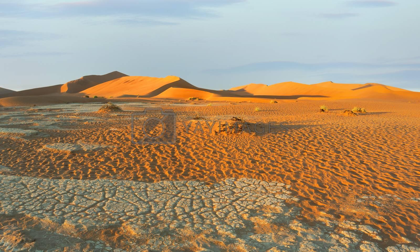 arid dead sunrise landscape, hidden Dead Vlei in Namib desert, dune with morning sun, Namibia, Africa wilderness landscape