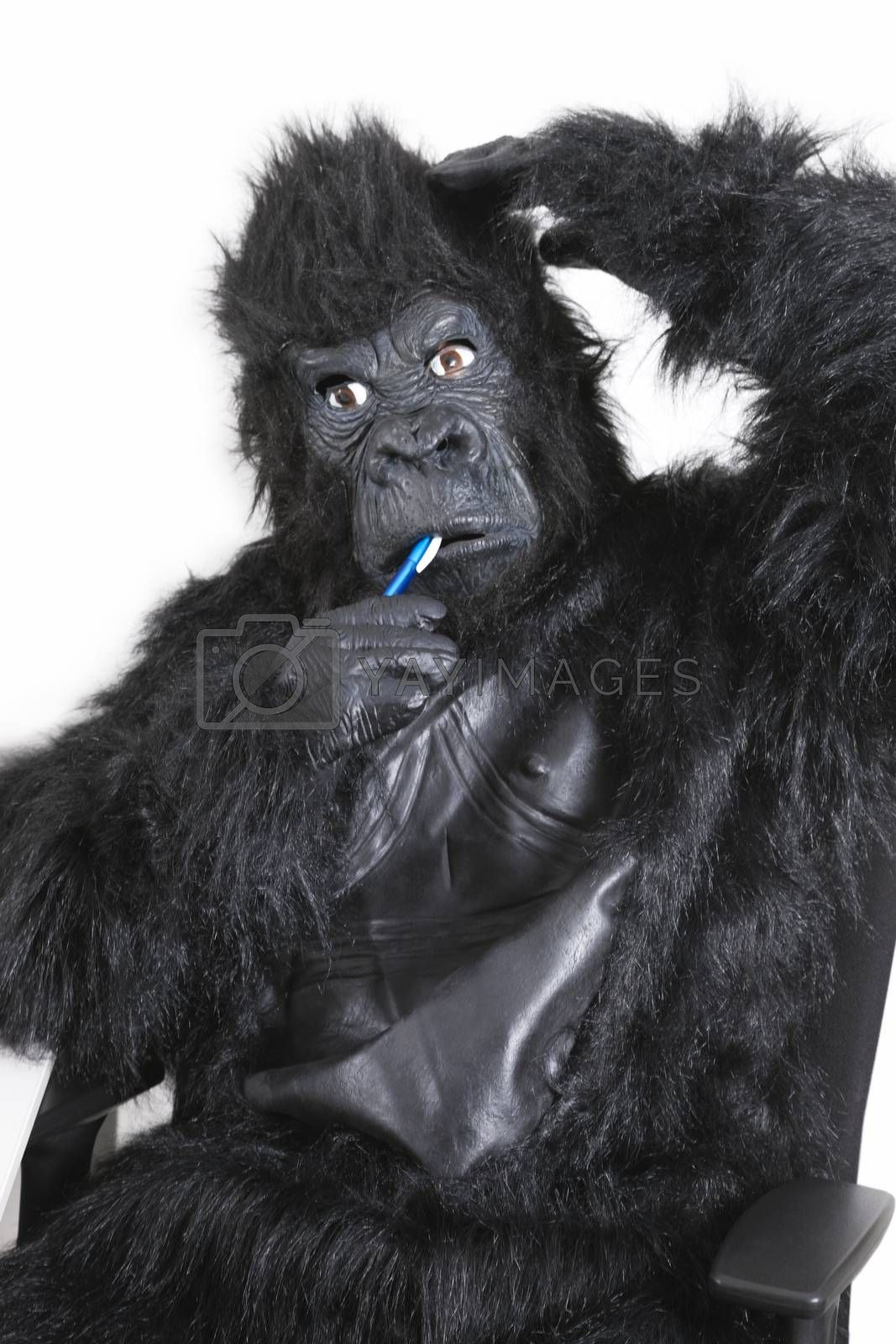 Portrait of young man in gorilla costume brushing teeth against white background