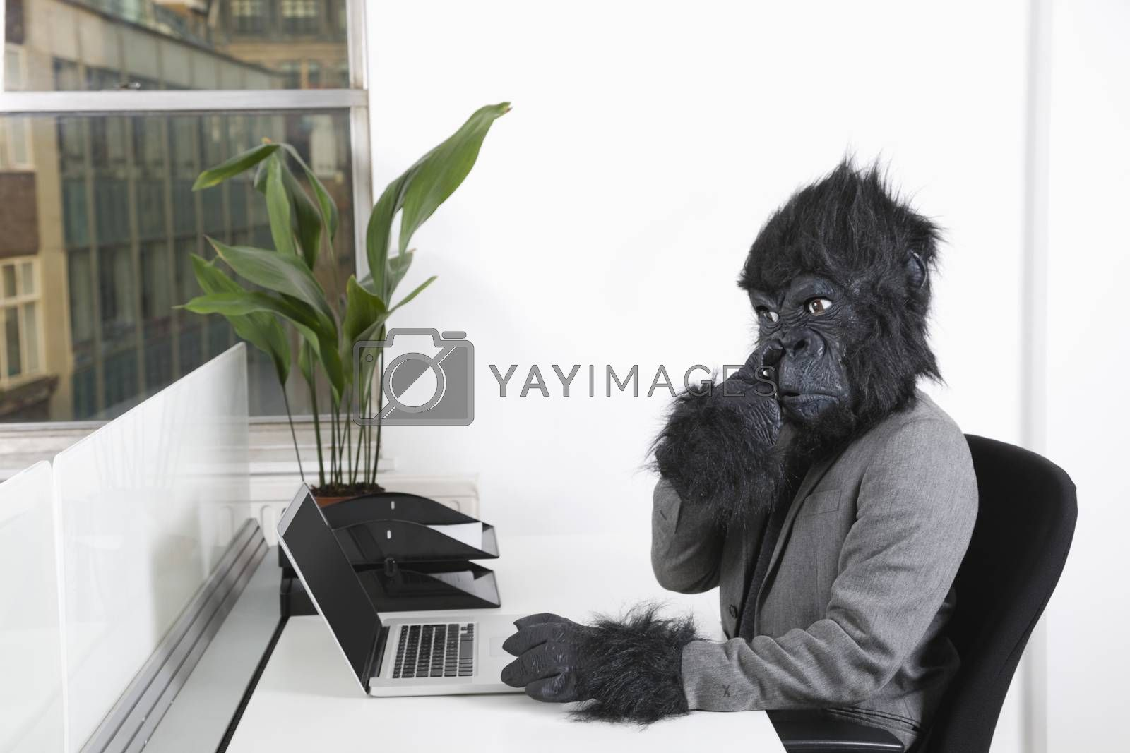 Young man in gorilla mask picking his nose in front of laptop at office