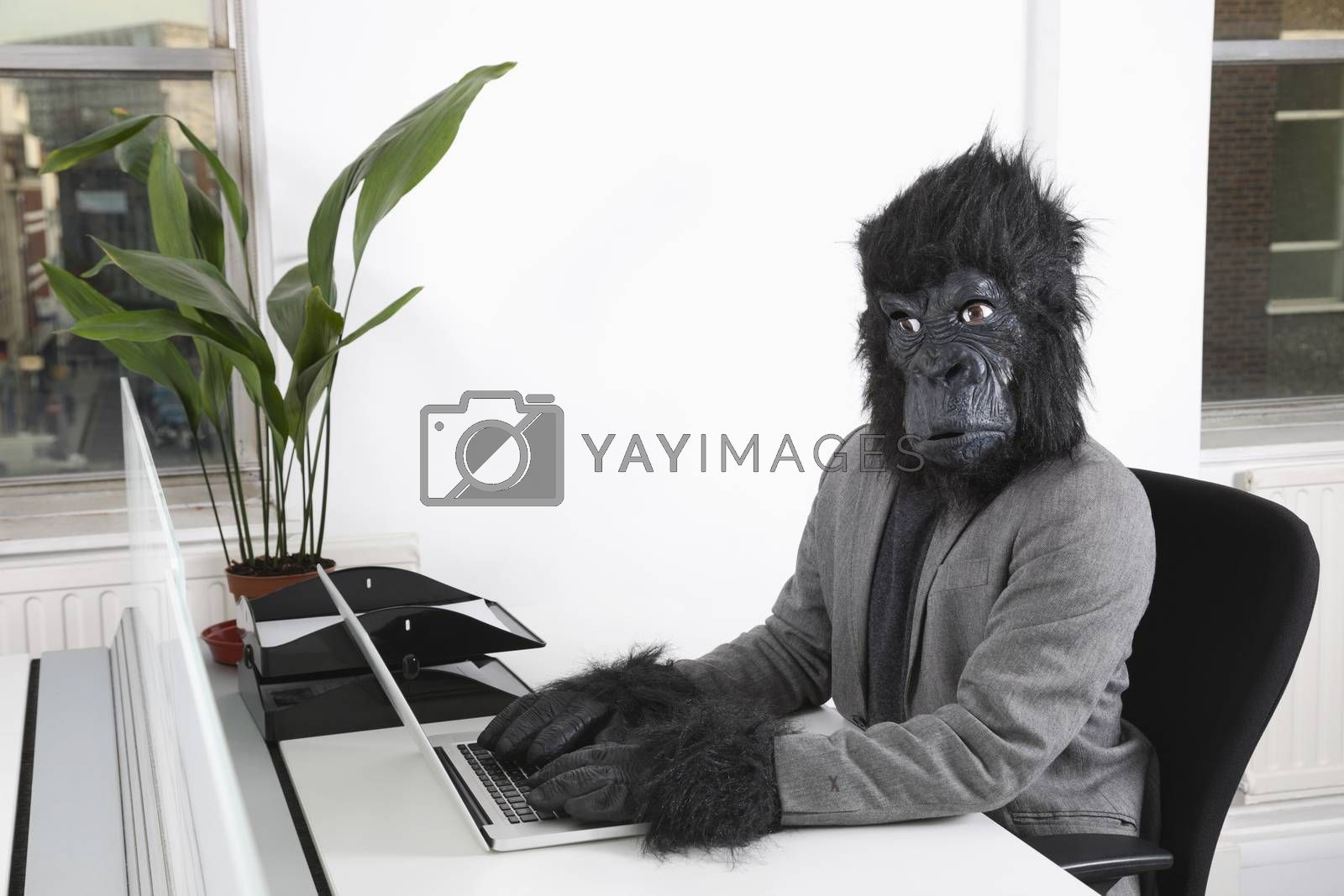 Portrait of young man in gorilla mask using laptop at office