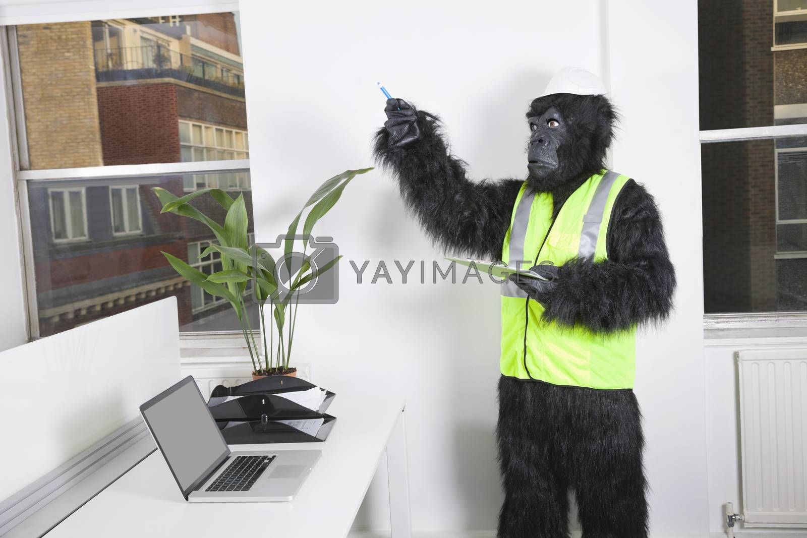 Young male engineer in gorilla costume and safety wear pointing towards window