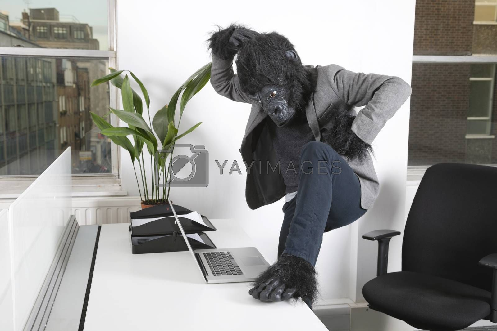Thoughtful young man in gorilla costume looking at laptop at office