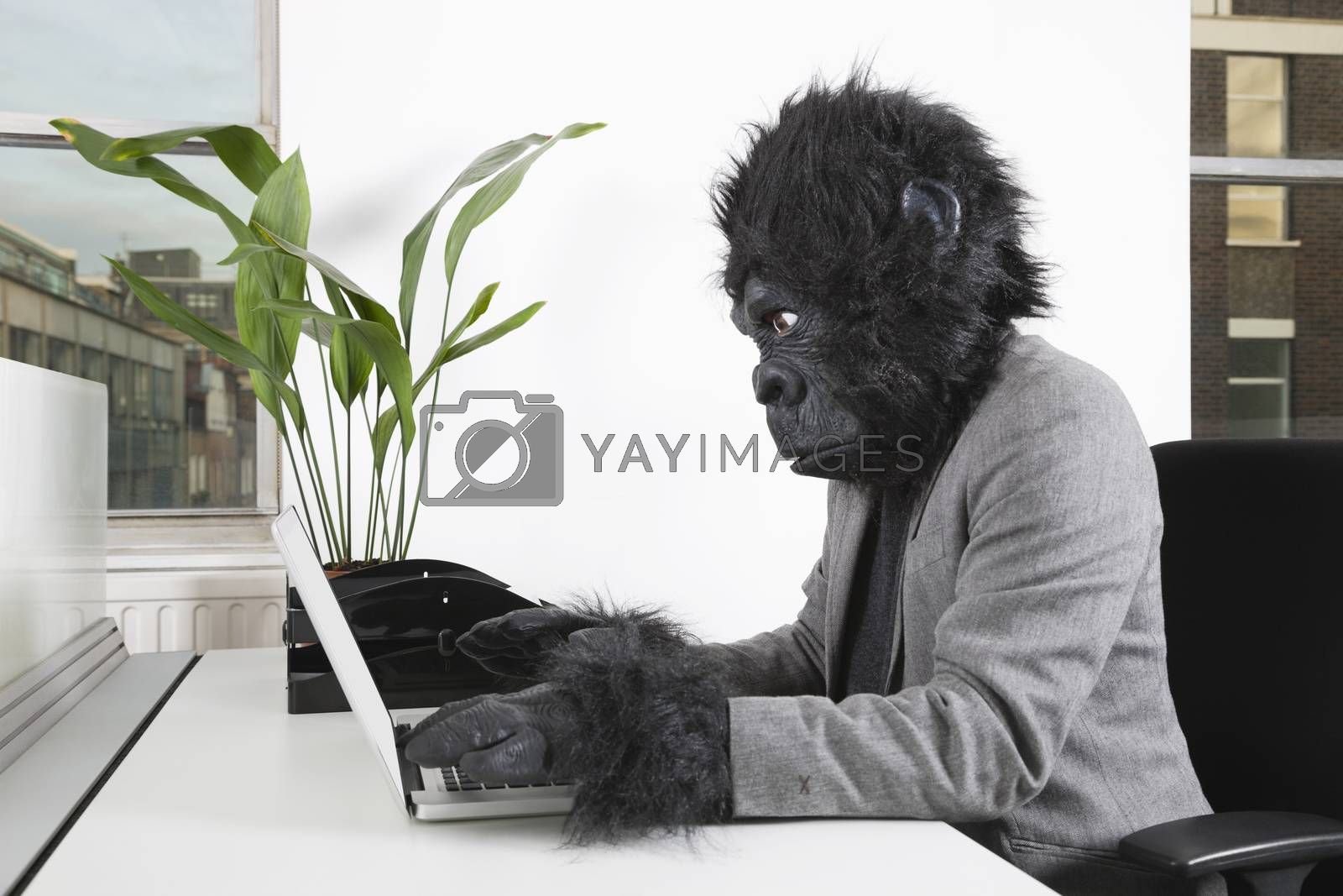 Side view of young man in gorilla mask using laptop at office