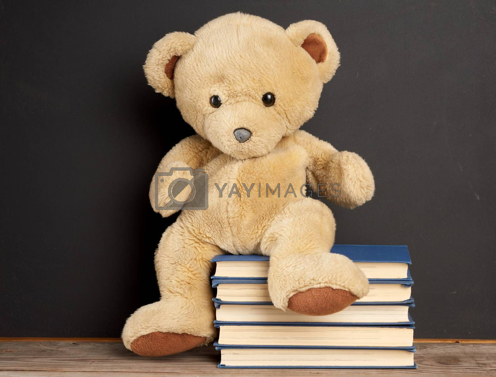 brown teddy bear sitting on a stack of books, black background, back to school