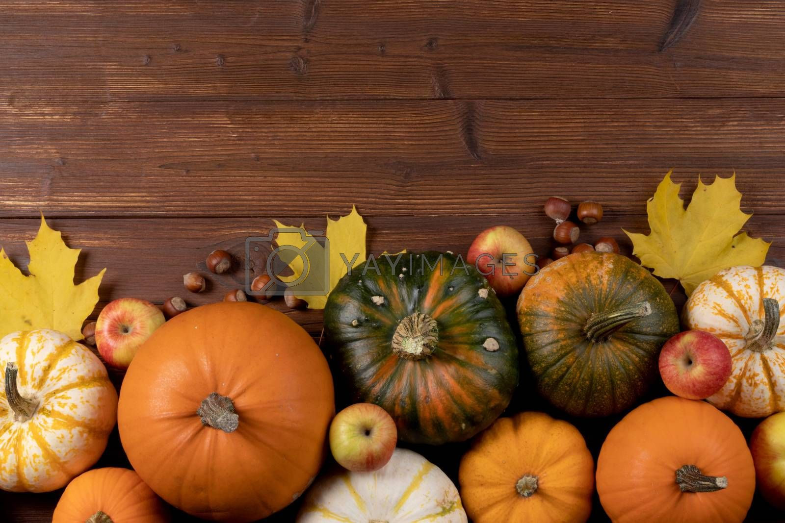 Autumn harvest still life with pumpkins , apples , hazelnuts on wooden background , top view