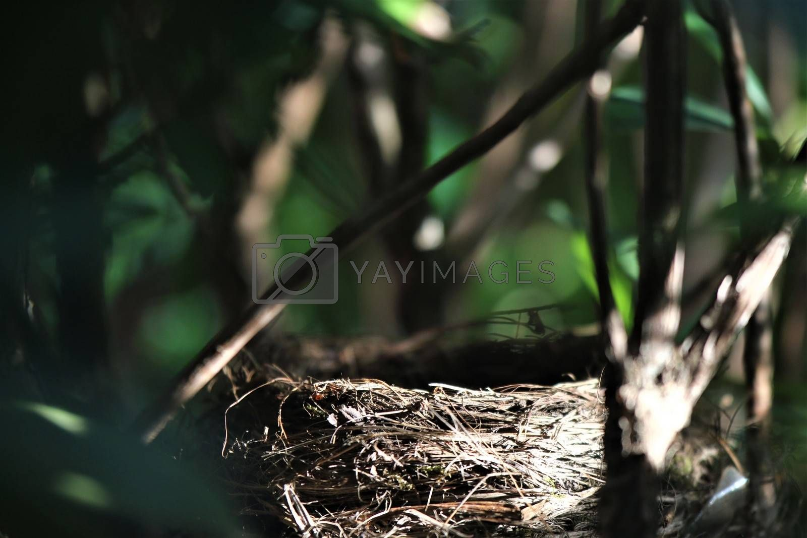An empty birds nest in a rhododendron bush
