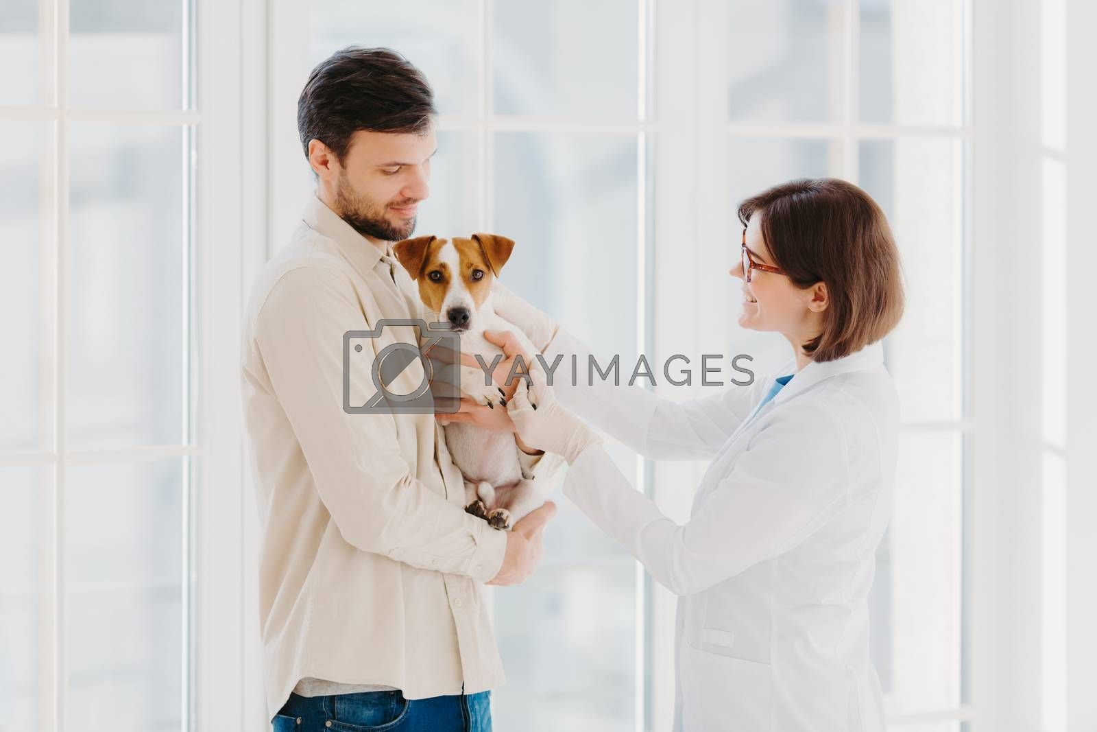 Sideways shot of veterinary woman going to examine sick dog. Jack russell terrier dog and his owner come to vet clinic, need help to cure disease, stand against window. Taking care of animals
