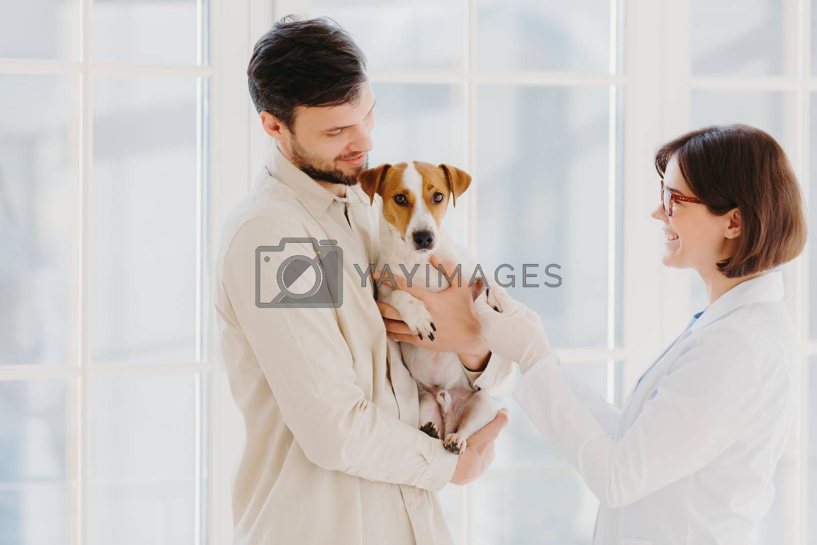 Horizontal shot of caring dog owner carries pet on hands, shows to animal specialist. Jack russell terrier being examined by vet in private clinic, stand indoor against window. Vet examining
