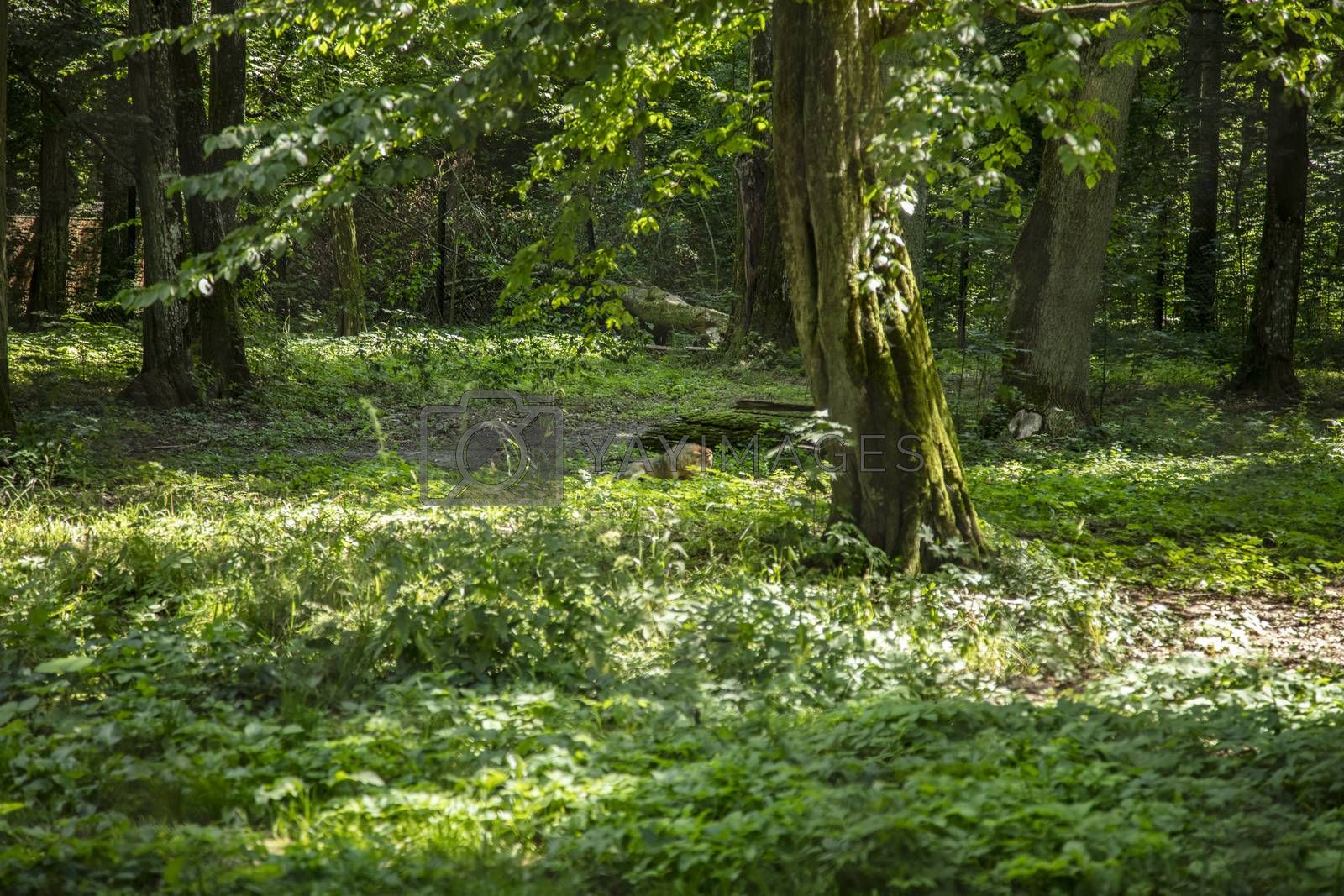 beautiful forest landscape in the Bialowieza Forest