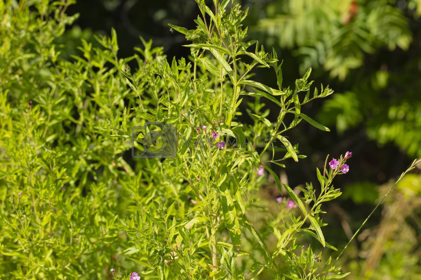 green bush in full sun