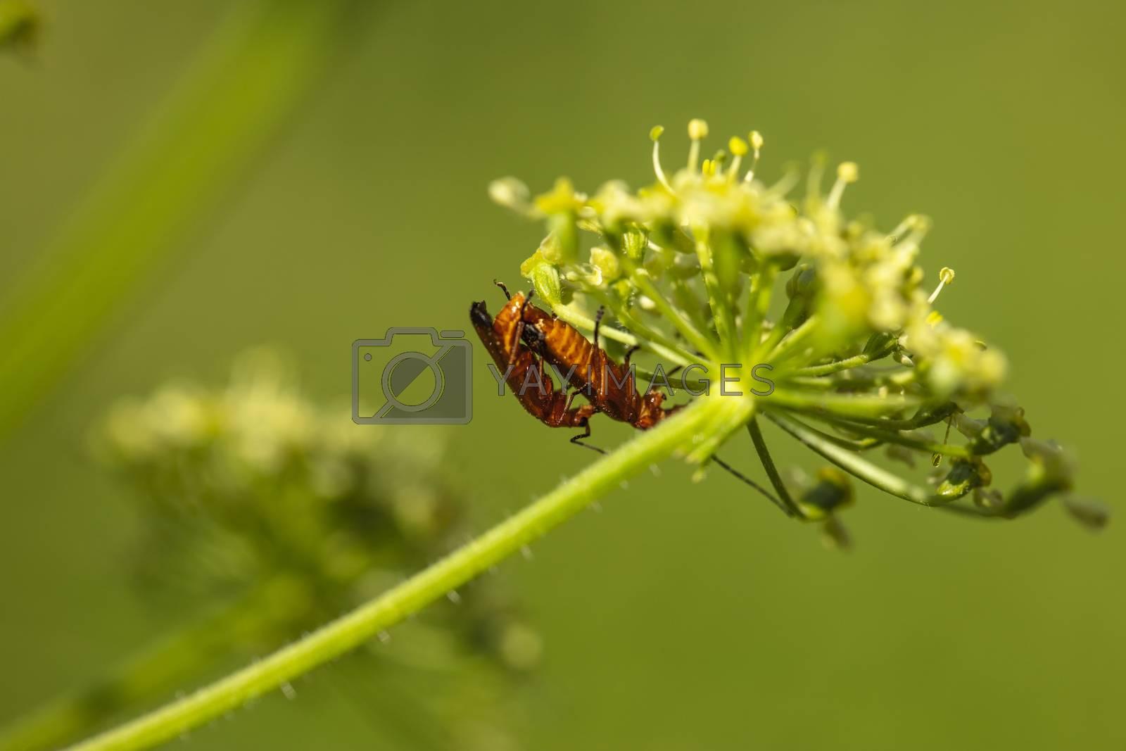 Apatura ilia, beautiful butterfly sitting on a leaf