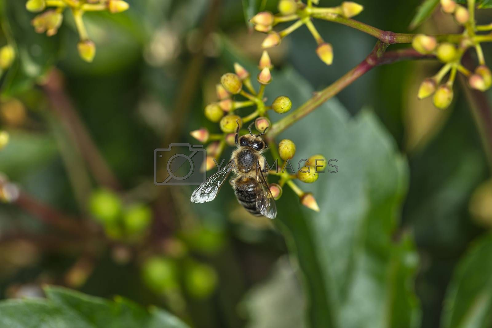 wasp is sitting on a yellow flower