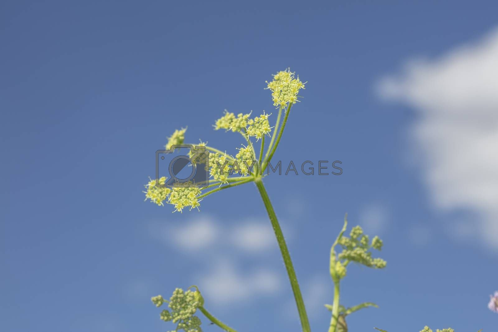 elements of grass in a beautiful blue sky as background