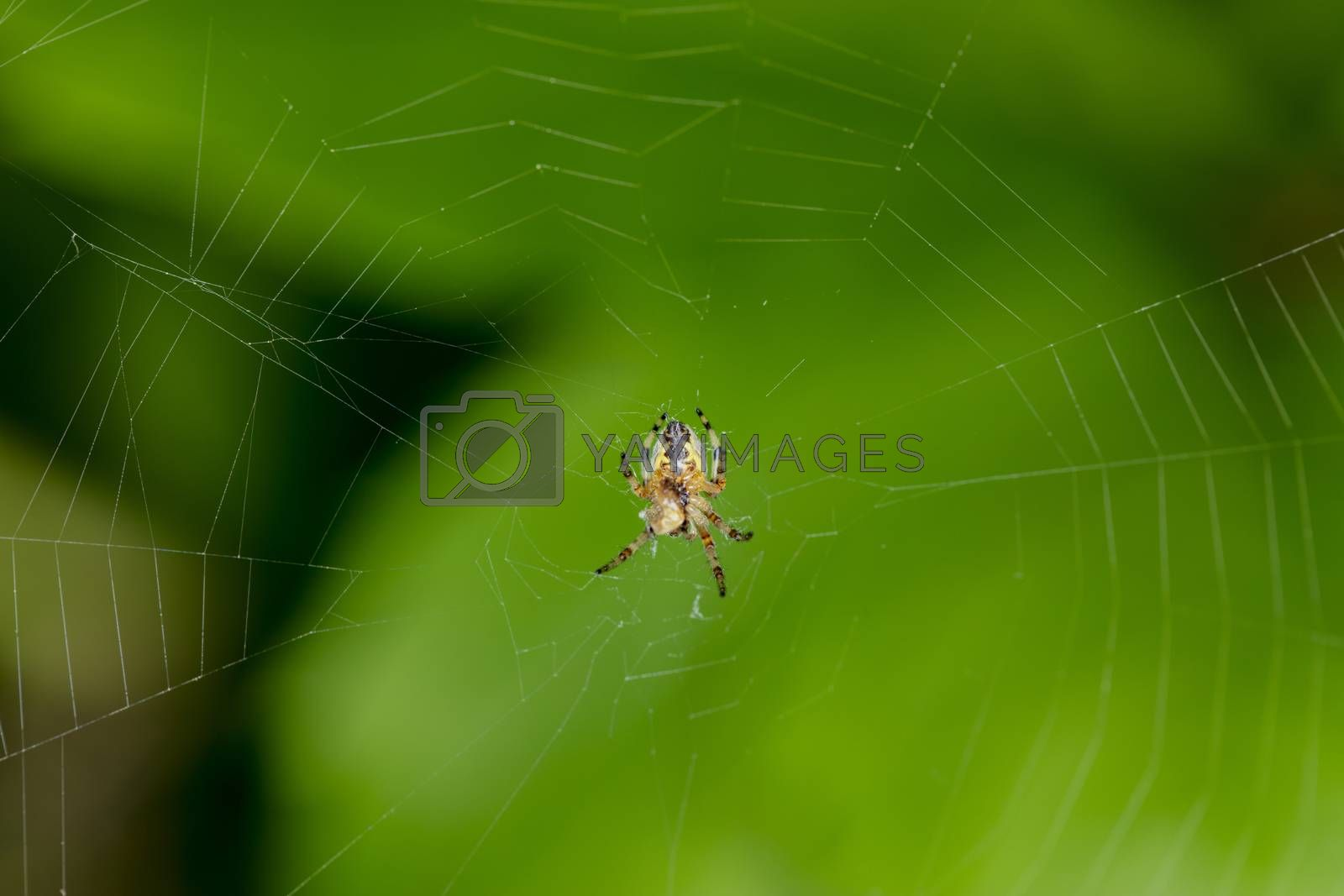 little spider sits on its web