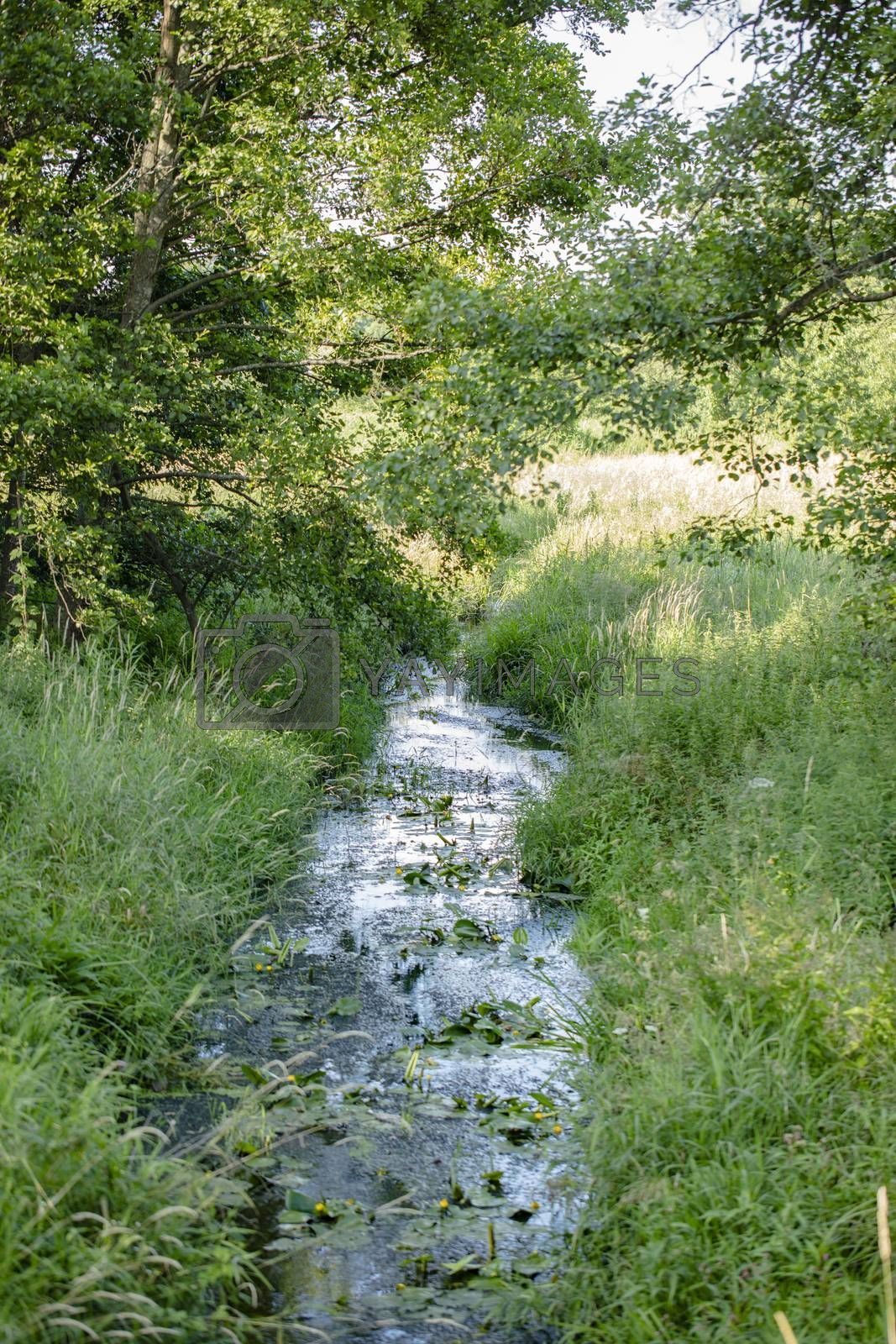 river bed covered with grasses and bushes