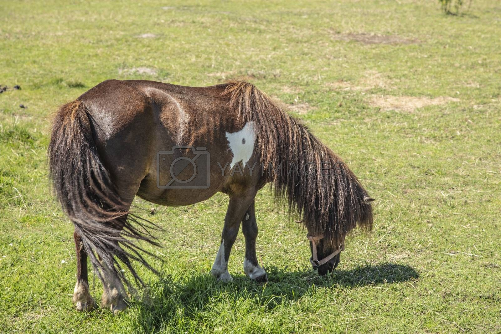 horse in a pasture eats green grass