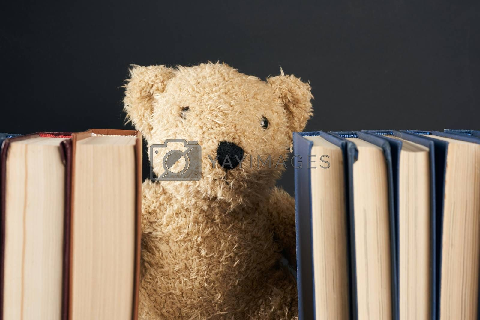 teddy bear peeking out from behind a stack of books, black background, back to school, close up