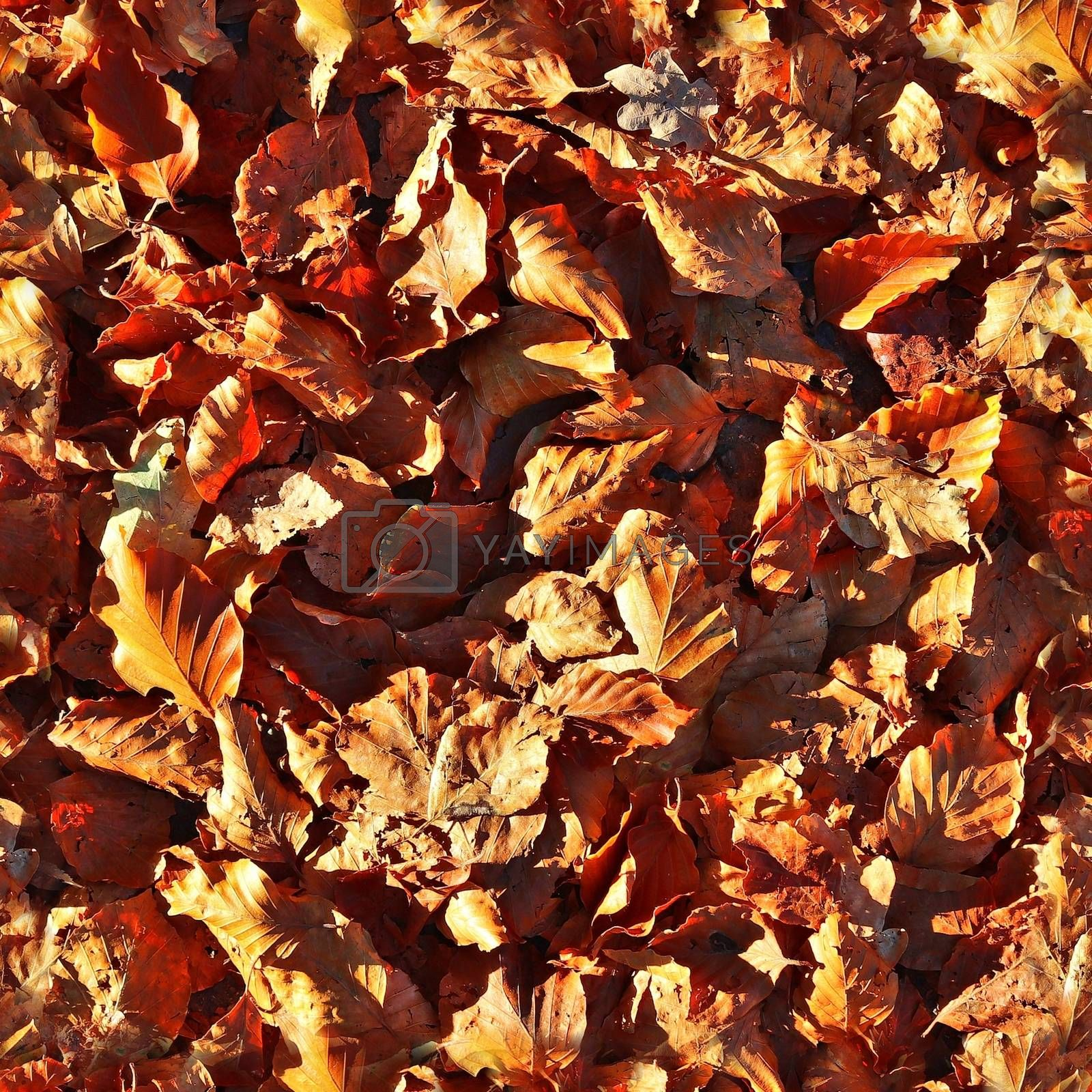 Photo realistic seamless texture pattern of autumn leaves on a forest ground