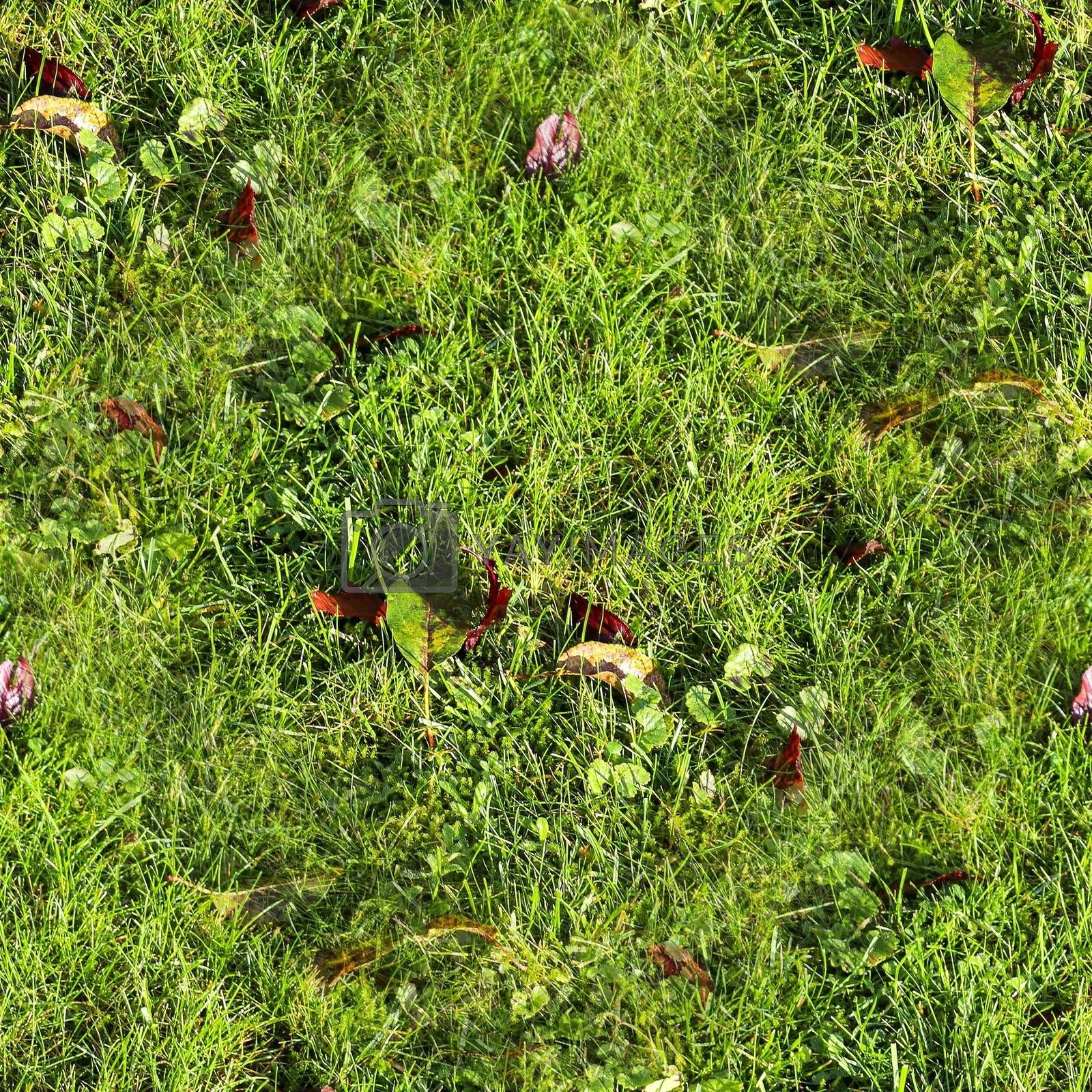 Photo realistic seamless grass texture in high resolution with more than 6 megapixel