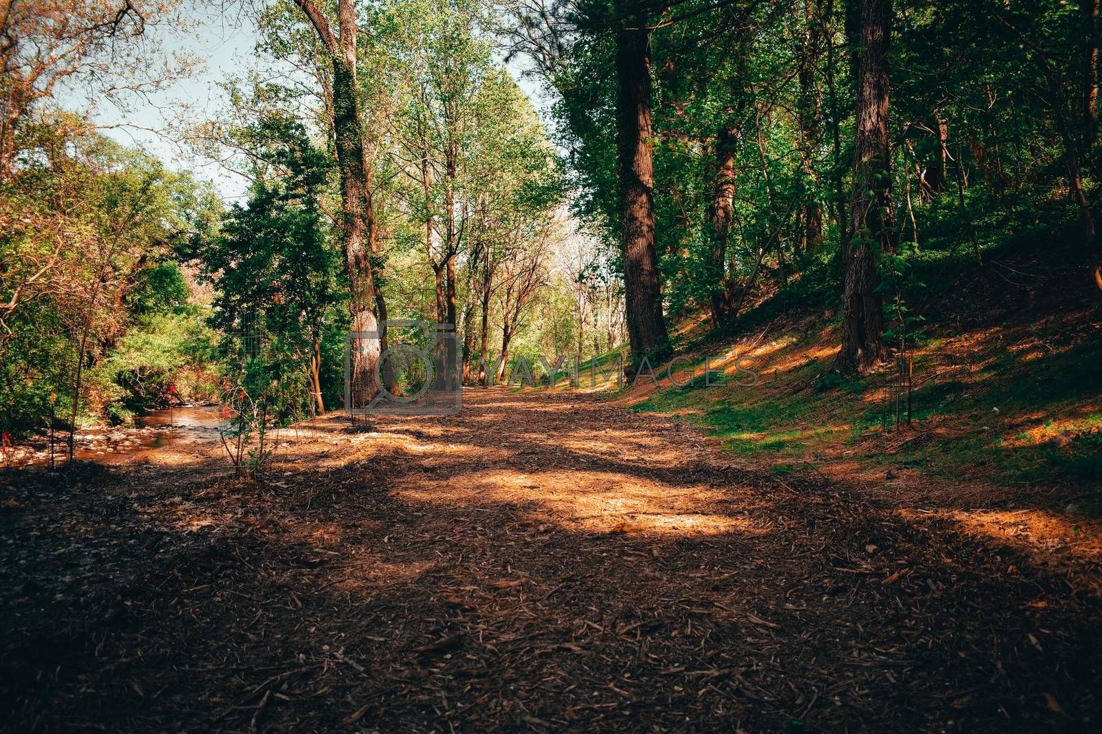 A Wide Path of Wood-Chips in a Summer Forest