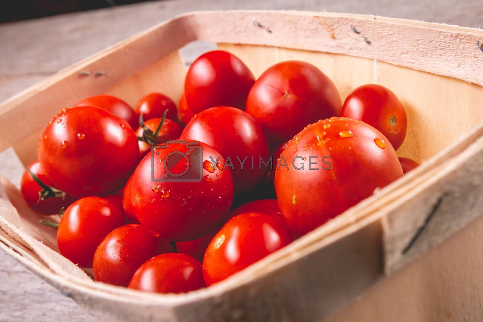 ripe tomatoes in a small wooden crate in studio