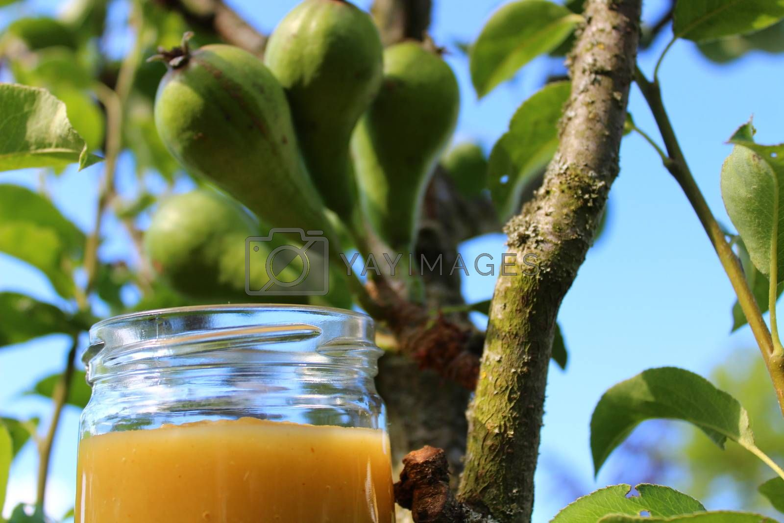 Royalty free image of pear sauce in front of a pear tree by martina_unbehauen