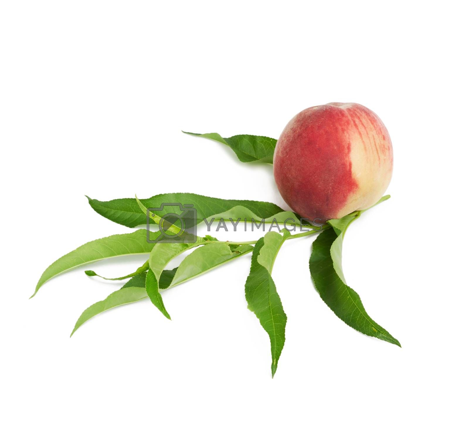 whole ripe red peach and green leaves isolated on a white background, close up