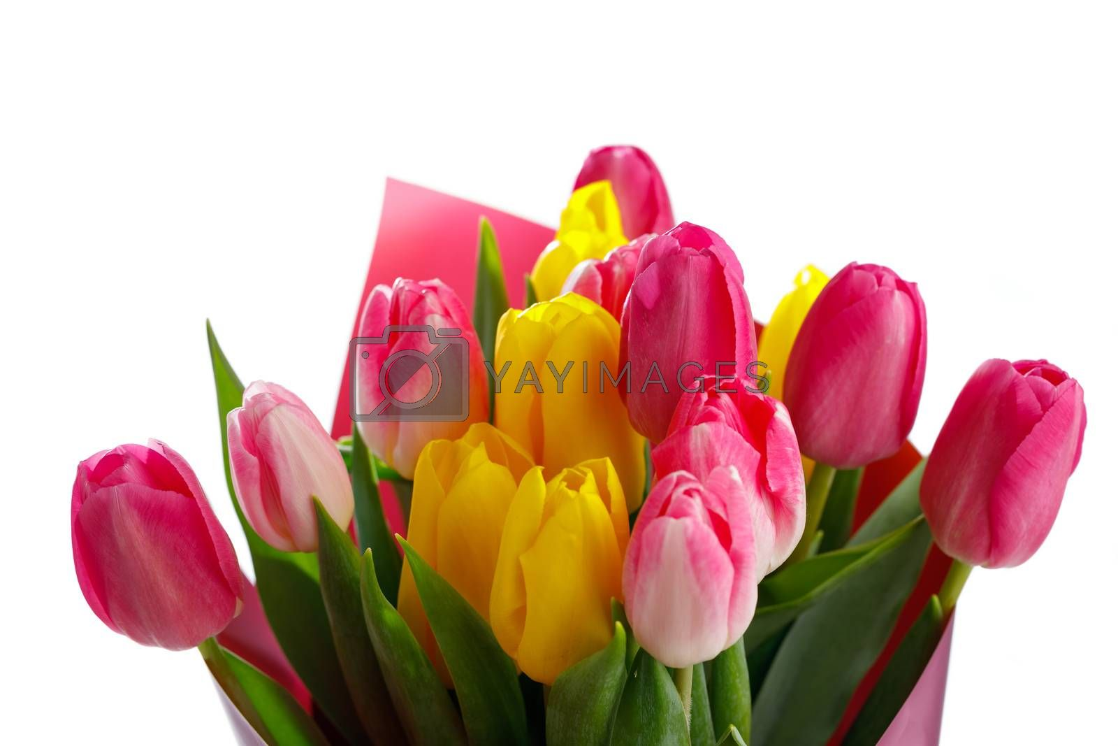 tulip flowers bouquet, close-up view, isolated on white