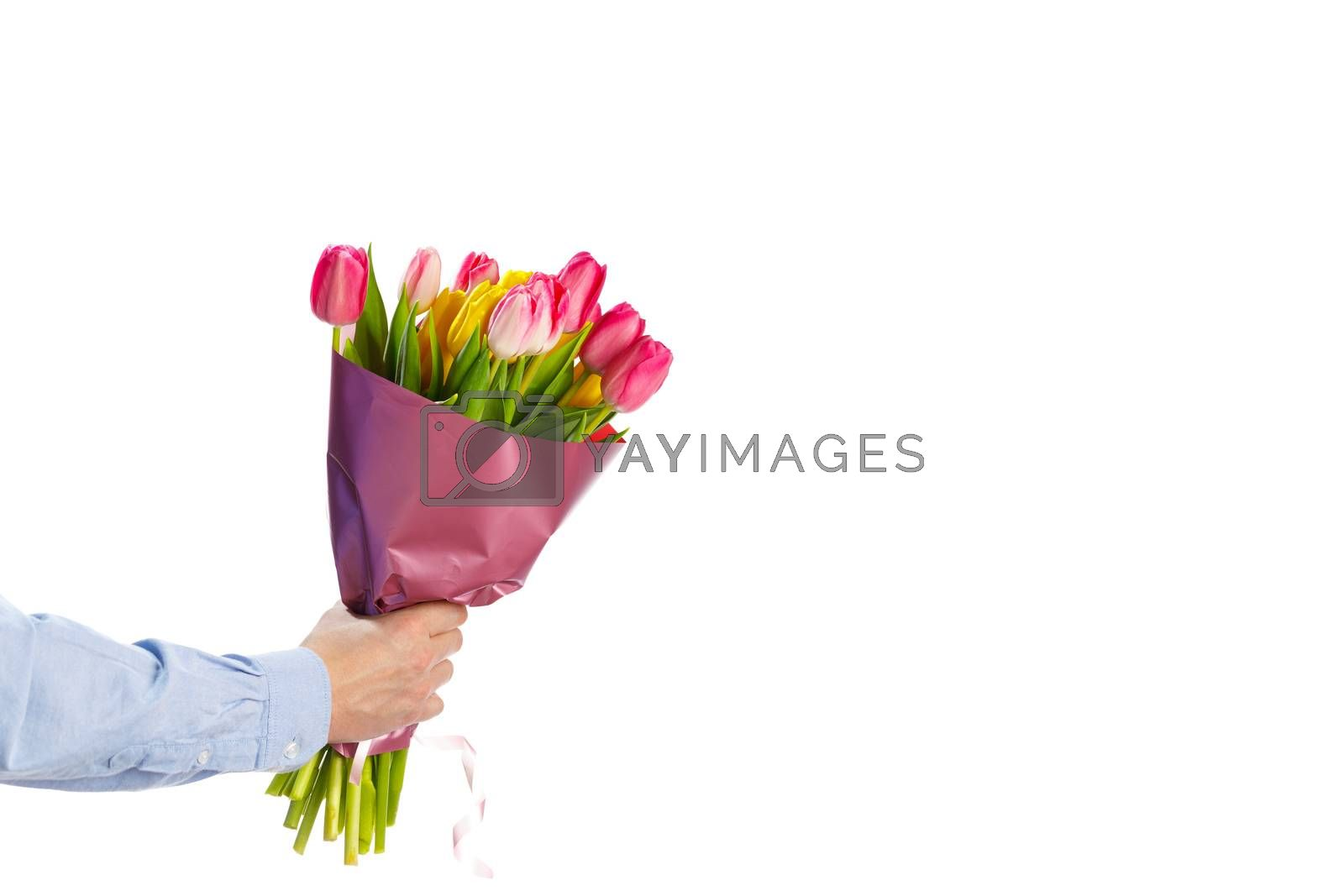 tulip flowers bouquet in hand, isolated on white