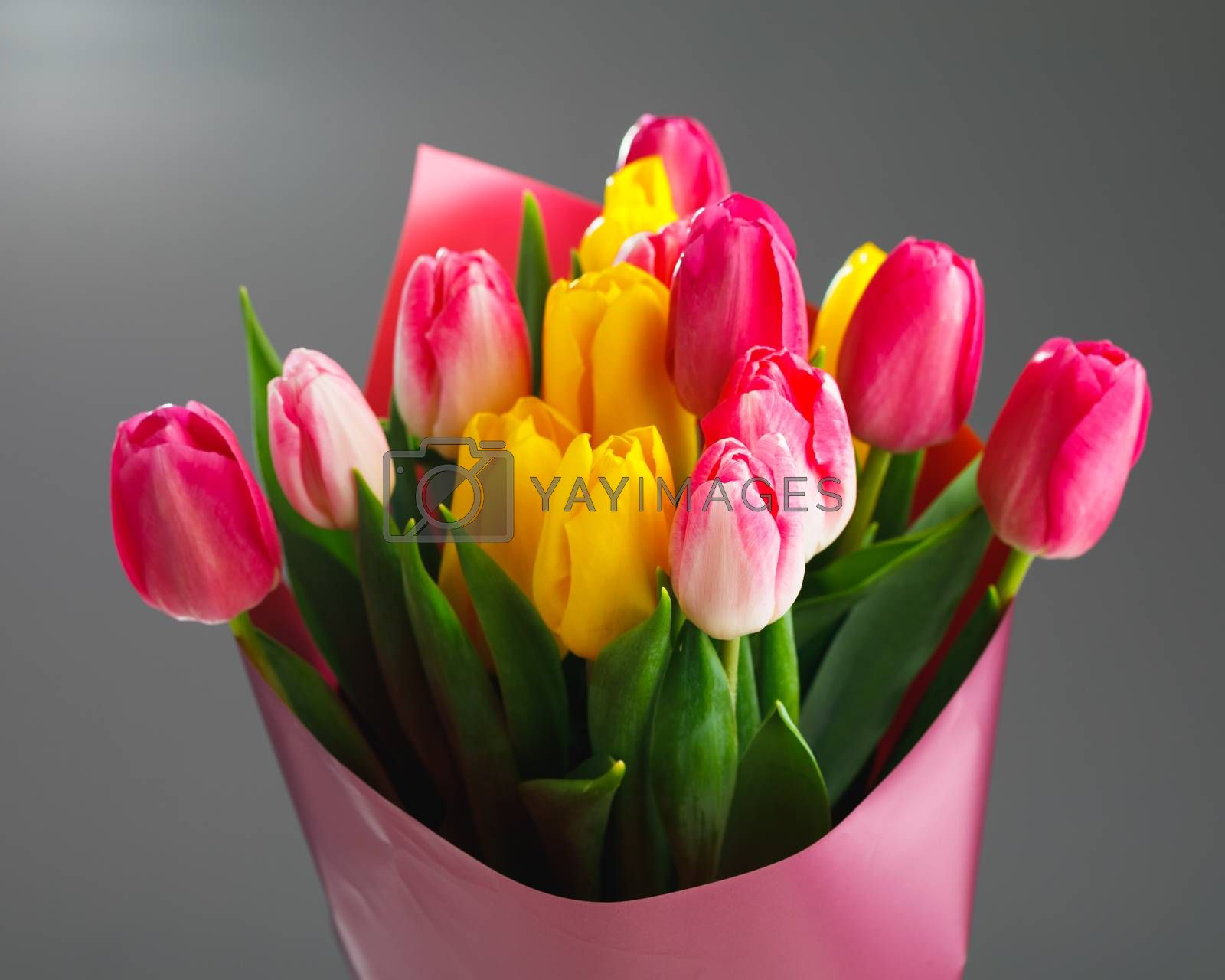 tulip flowers bouquet, close-up view, gray background
