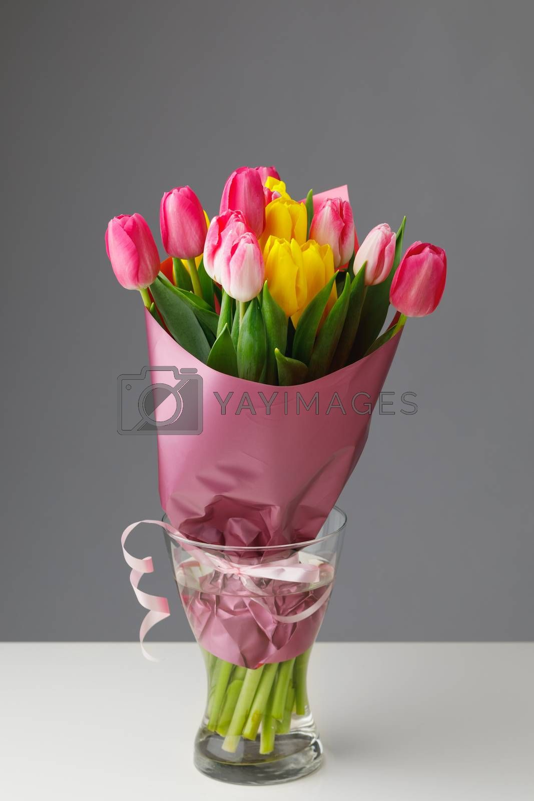 tulip flowers bouquet in a glass vase, gray background
