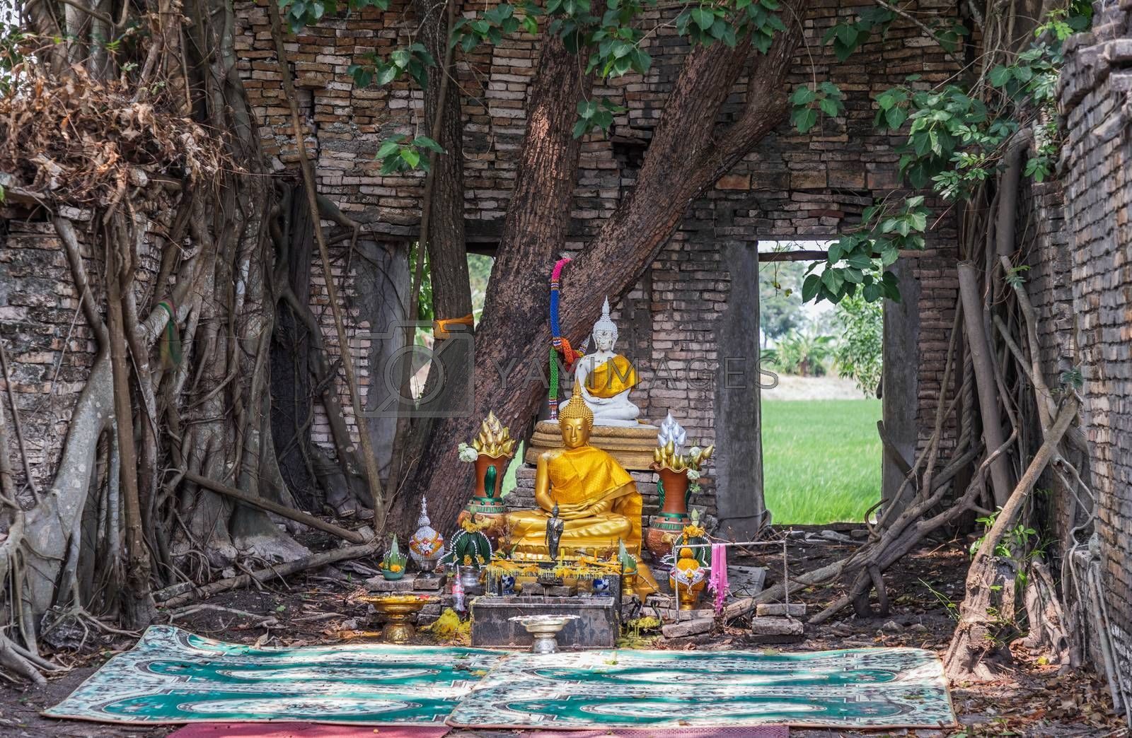 Nakhon Nayok, Thailand - Mar 21, 2020 : Many big tree roots covering The ancient church without roof inside there is a Buddha statue at The ancient of a 200 year old church. Wat Pah Krathum. Selective focus.