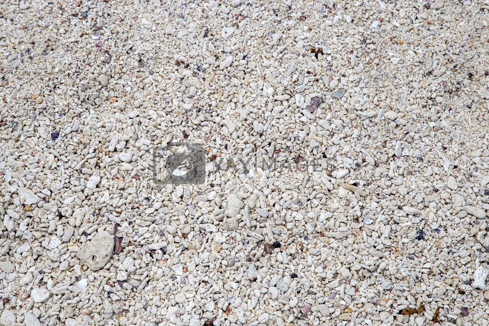 Background of shells, rocks and coral on beach
