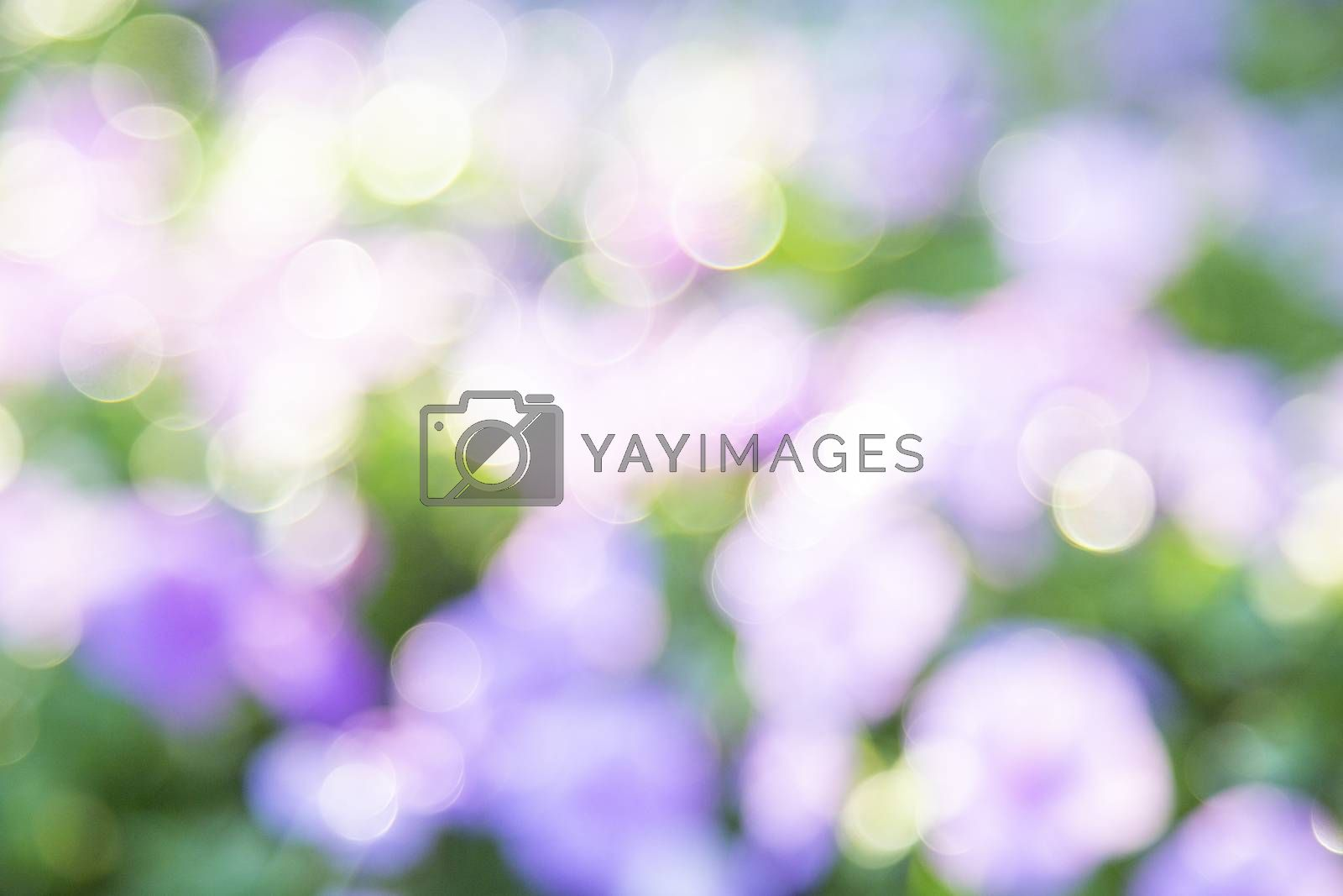 Abstract blur of nature with green and purple