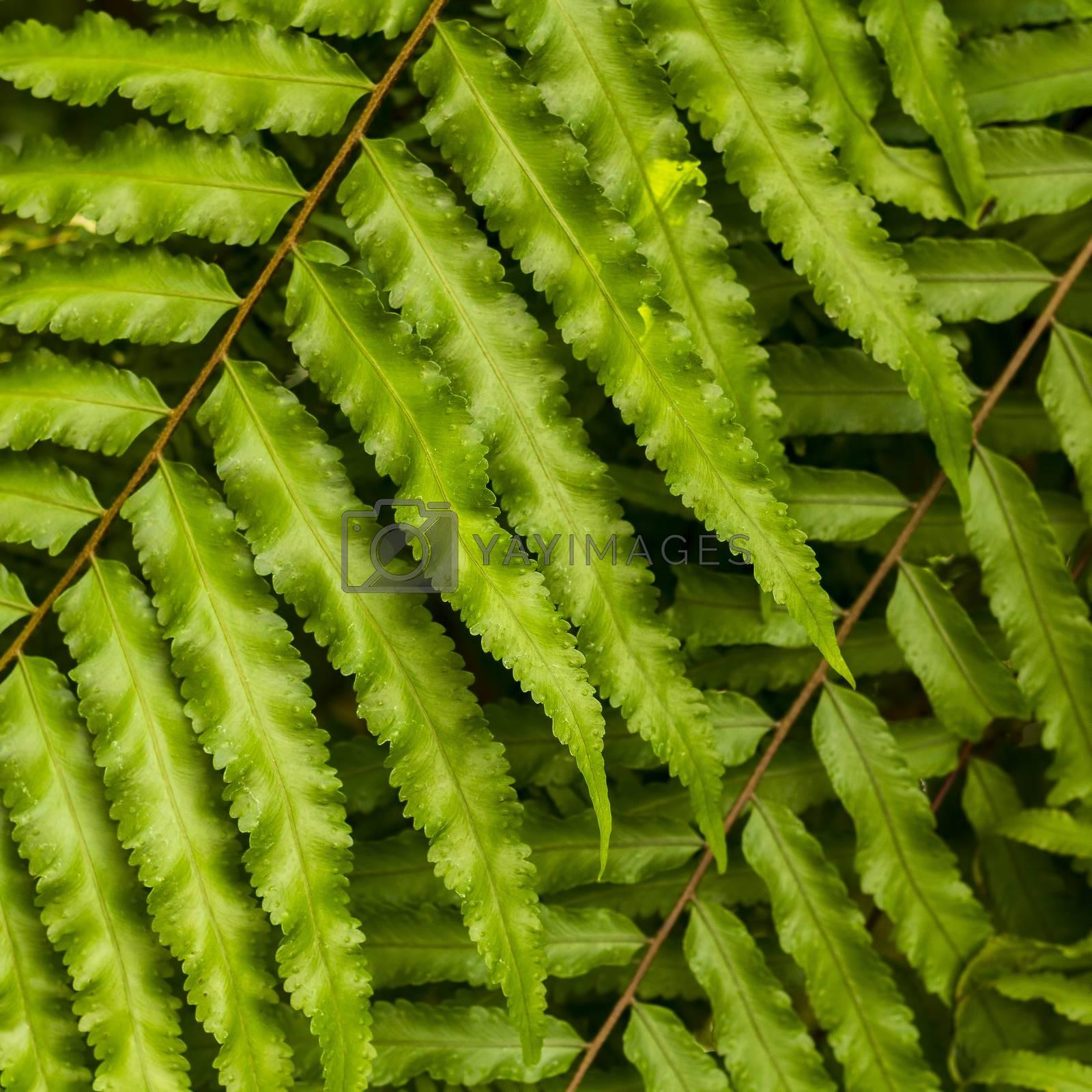 Close up fern leaf in the garden