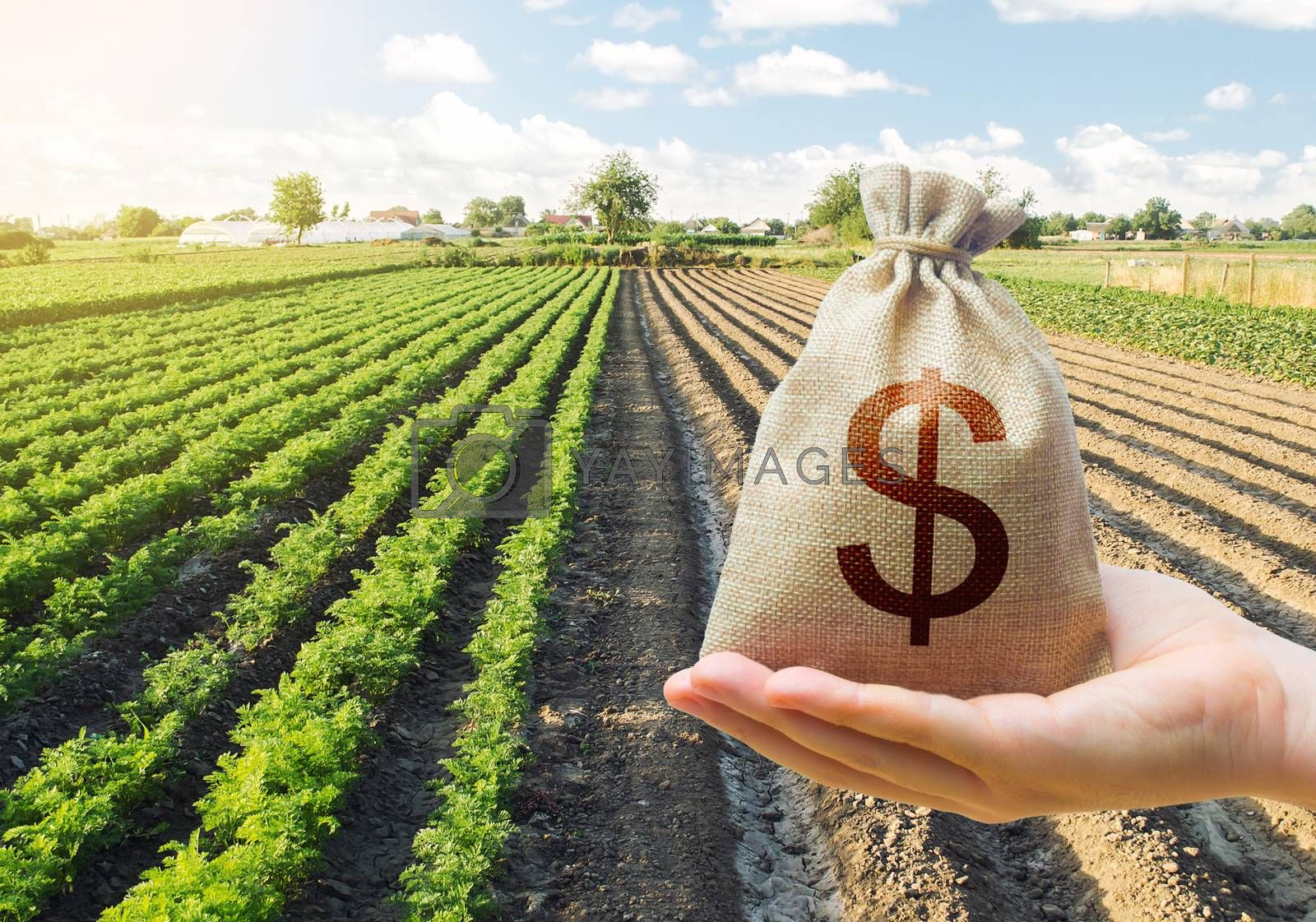 Hand holds out a dollar money bag on a background of a carrot plantation. Support and subsidies. Farm loans. Lending farmers for purchase land and seed material, modernization. Revival of the village.