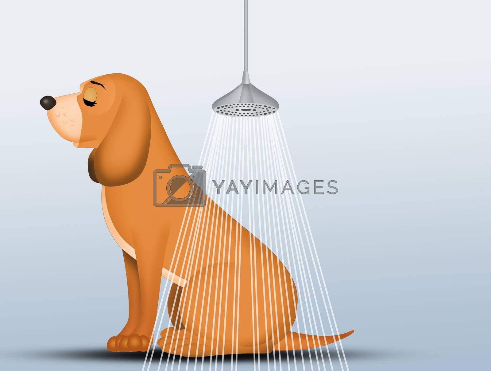 illustration of how to wash the dog